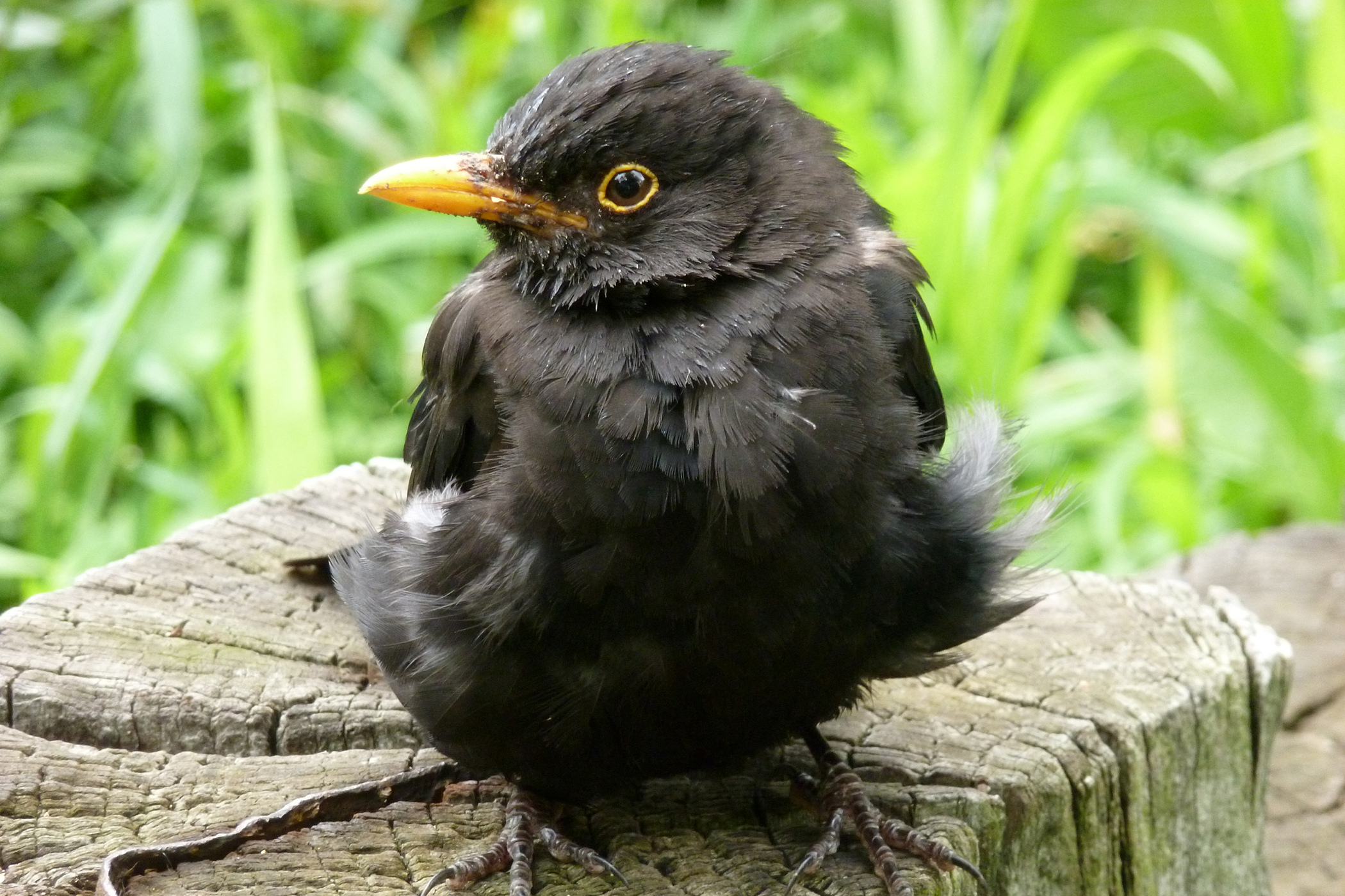 Beak Deformities in Birds
