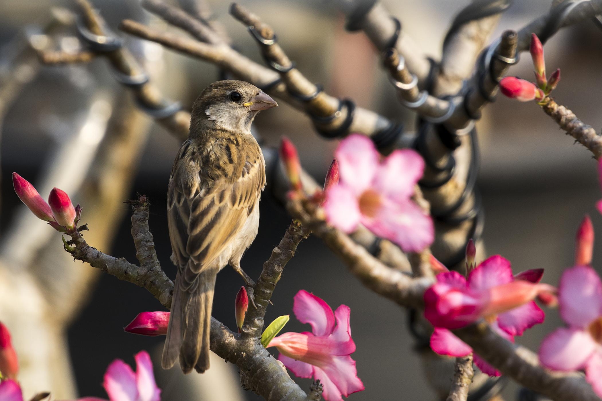 Blepharitis in Birds