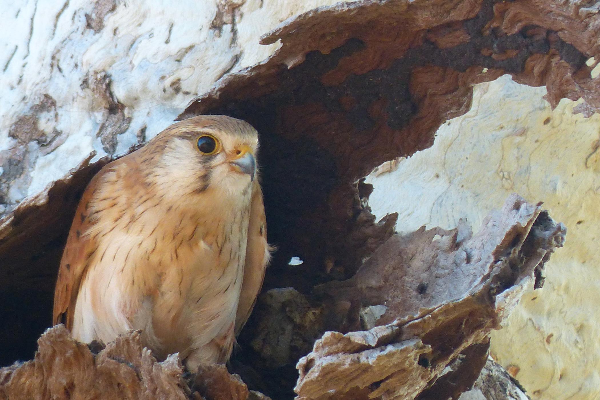 Campylobacter Infection in Birds