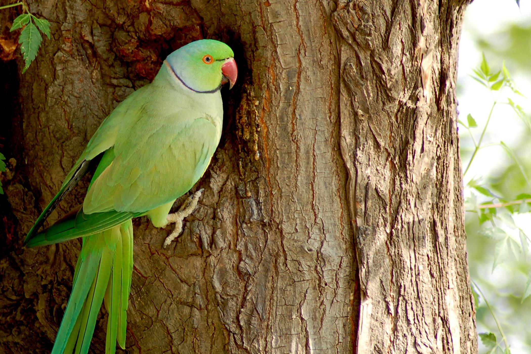 Heavy Metal Toxicosis in Birds