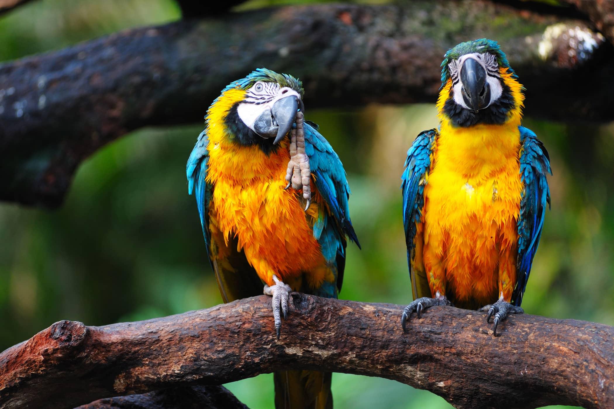 Herpesvirus Infection in Birds