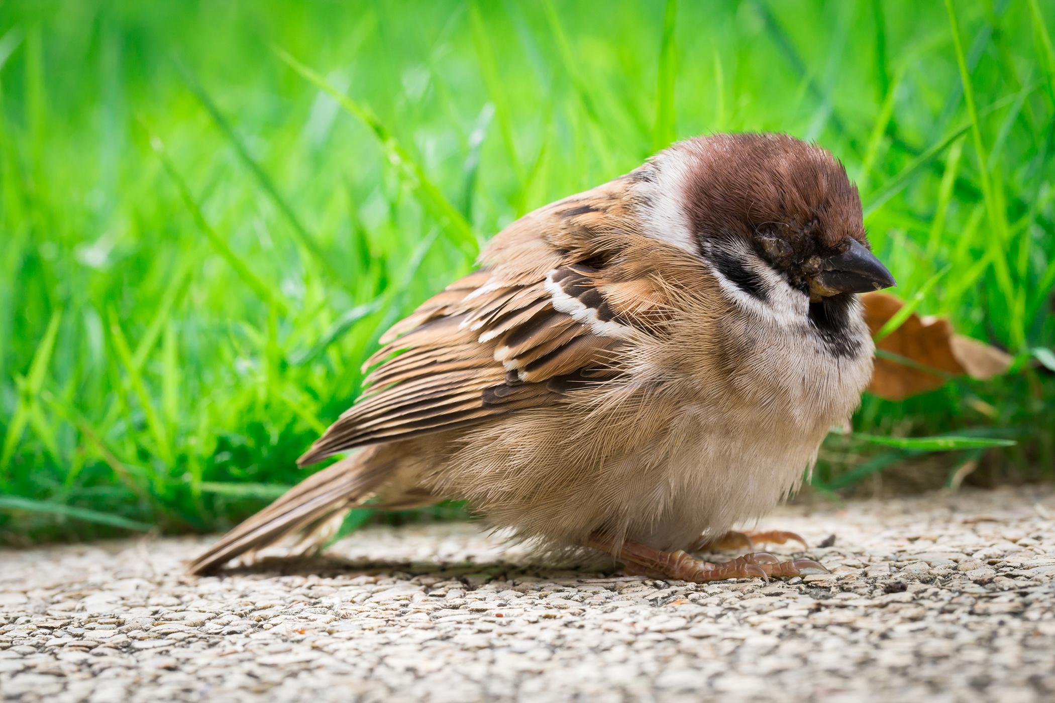 Influenza in Birds