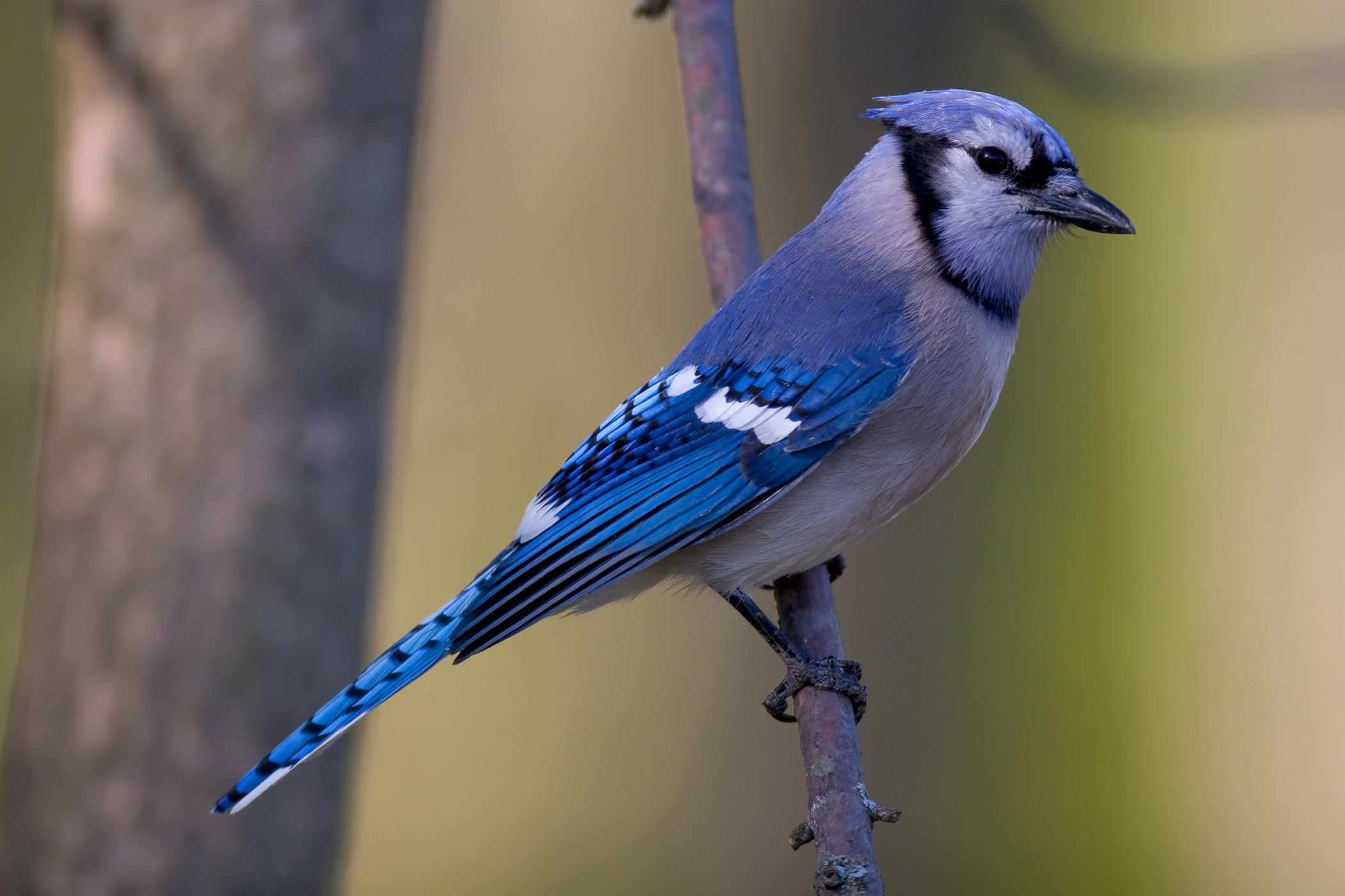 Lead Poisoning in Birds
