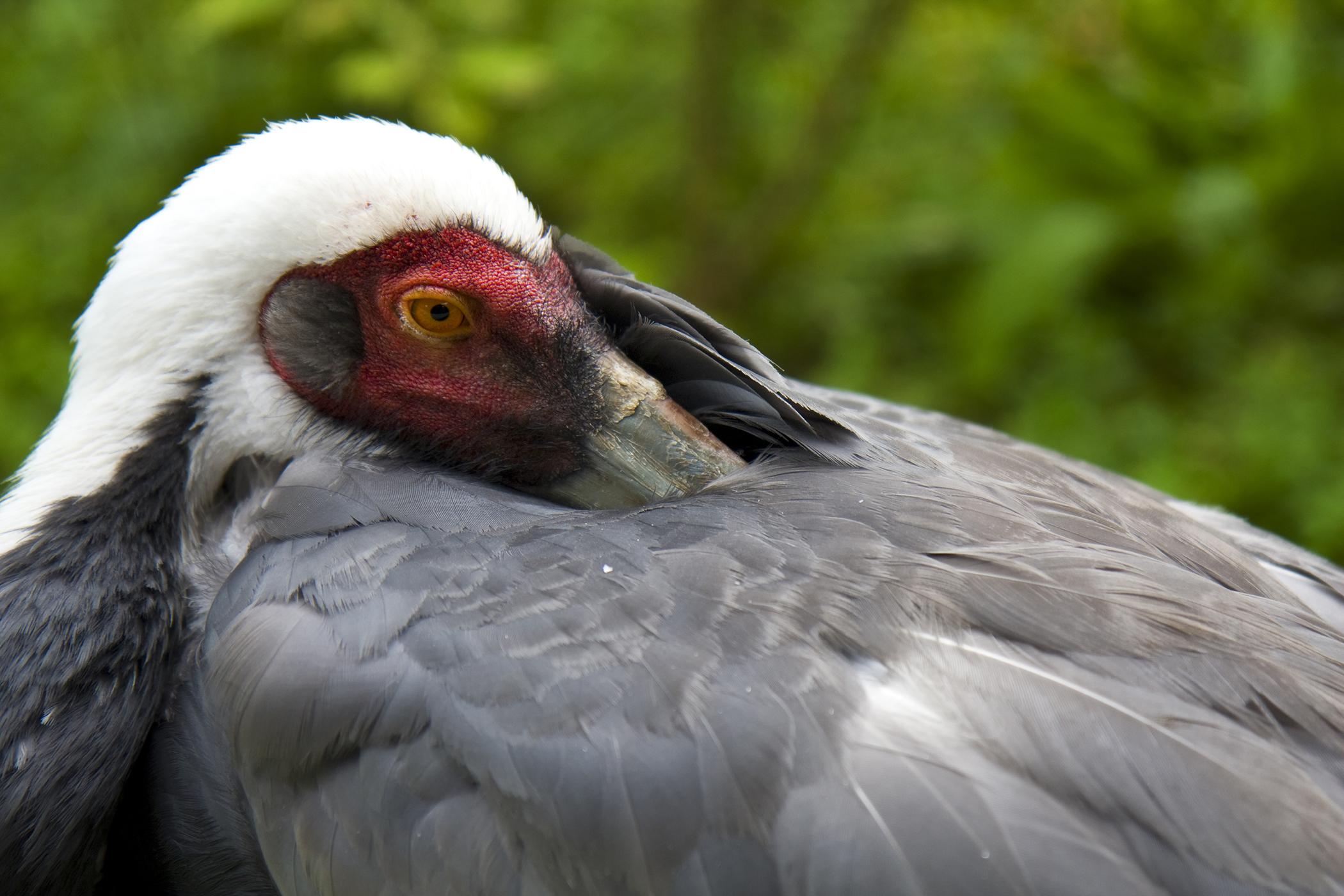 Ornithosis in Birds
