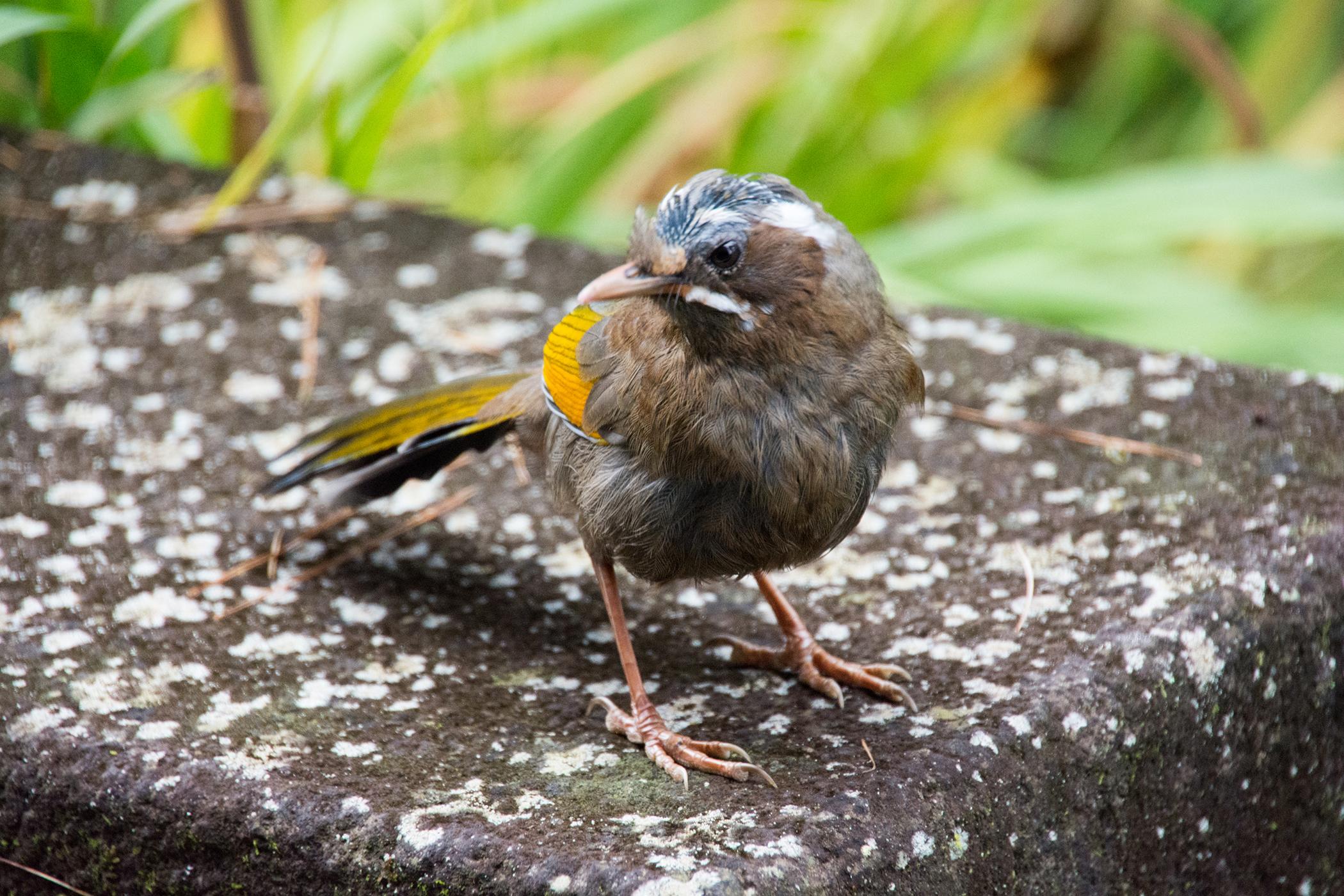 Poxvirus Infections in Birds