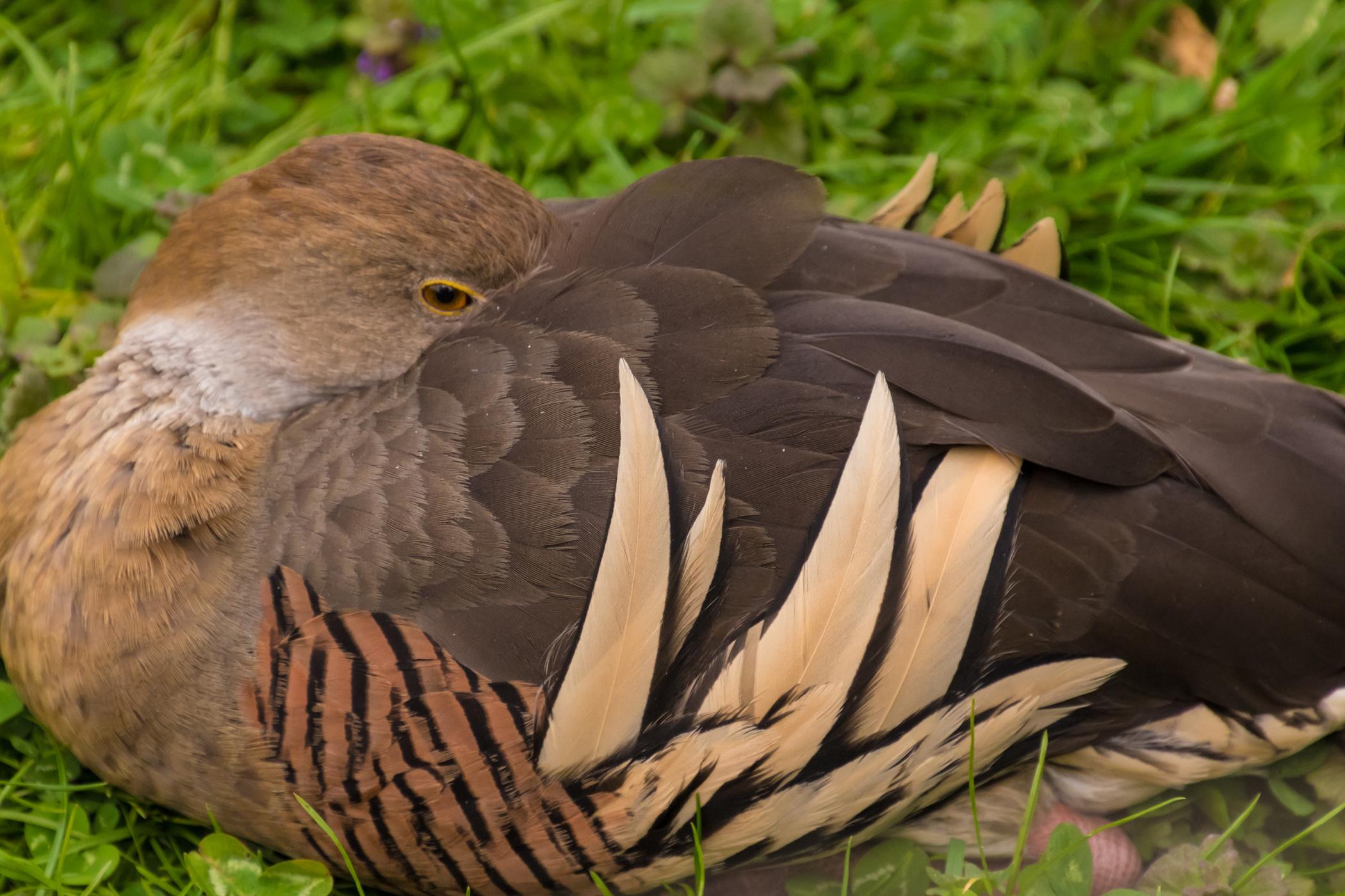 Psittacosis (Parrot Fever) in Birds