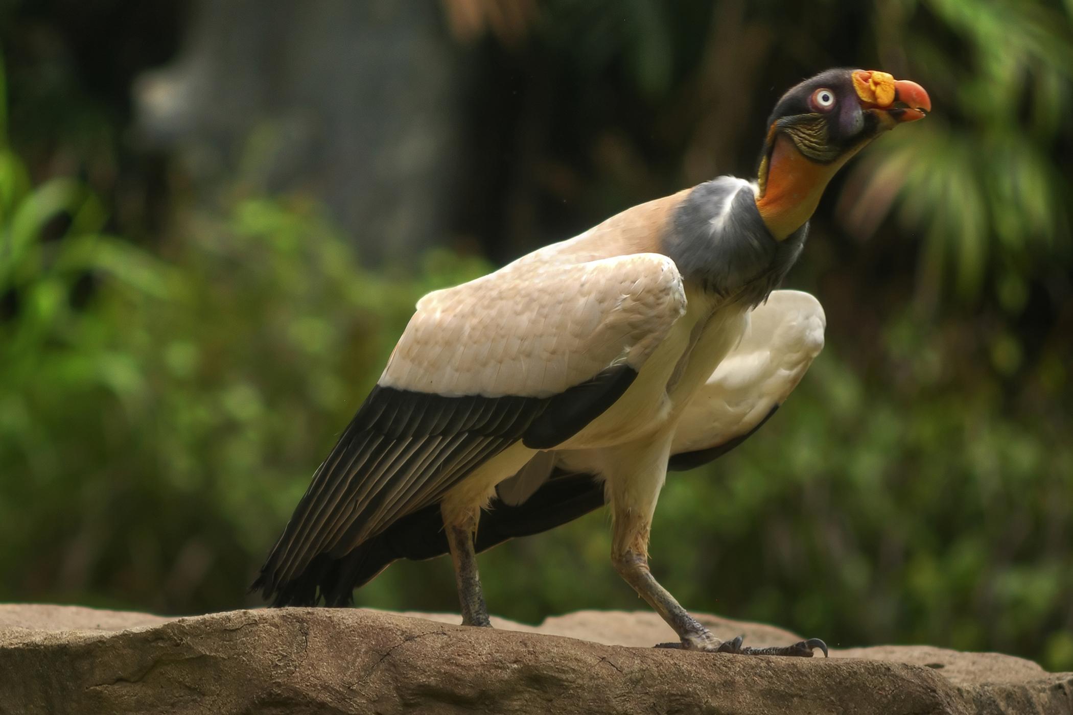 Renal Carcinoma in Birds