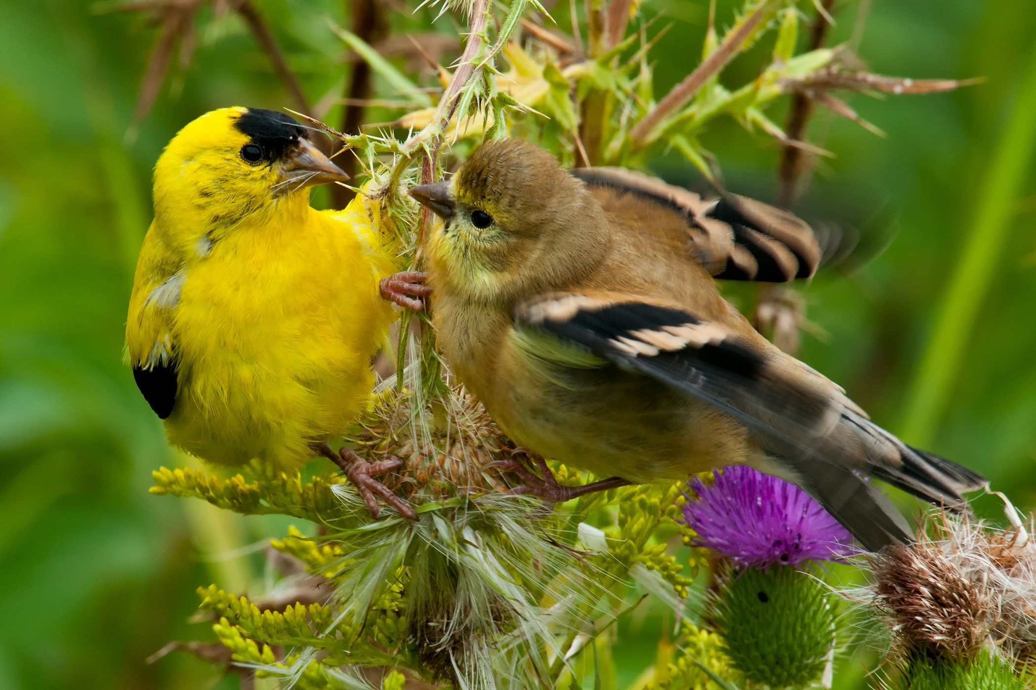 Sneezing and Nasal Discharge in Birds - Symptoms, Causes. Diagnosis, Treatment, Recovery, Management, Cost
