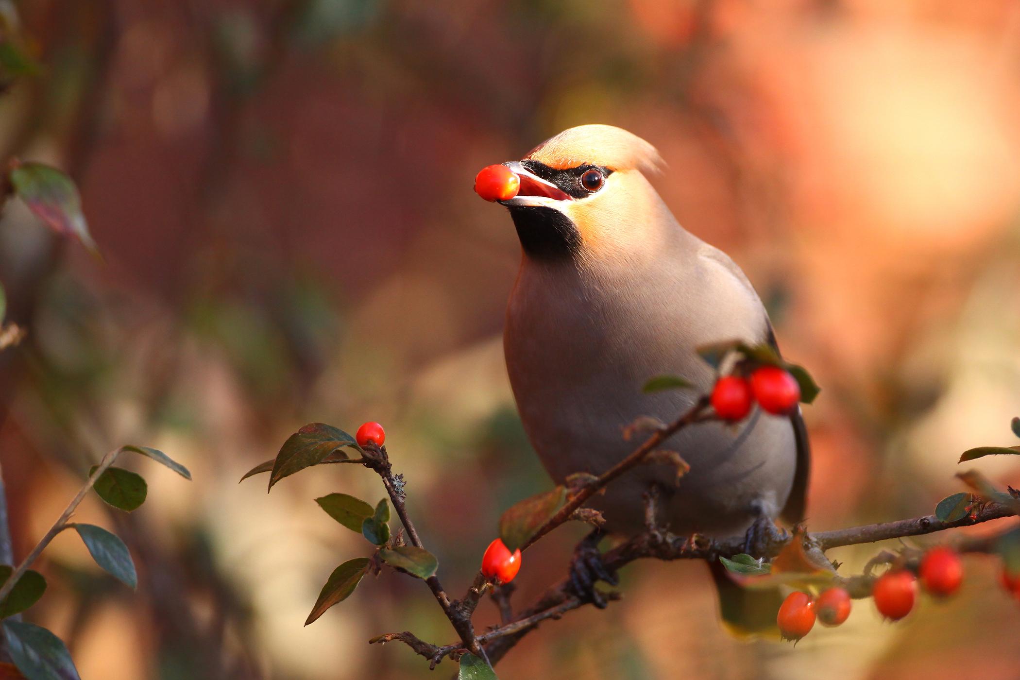 Toe Malposition in Birds