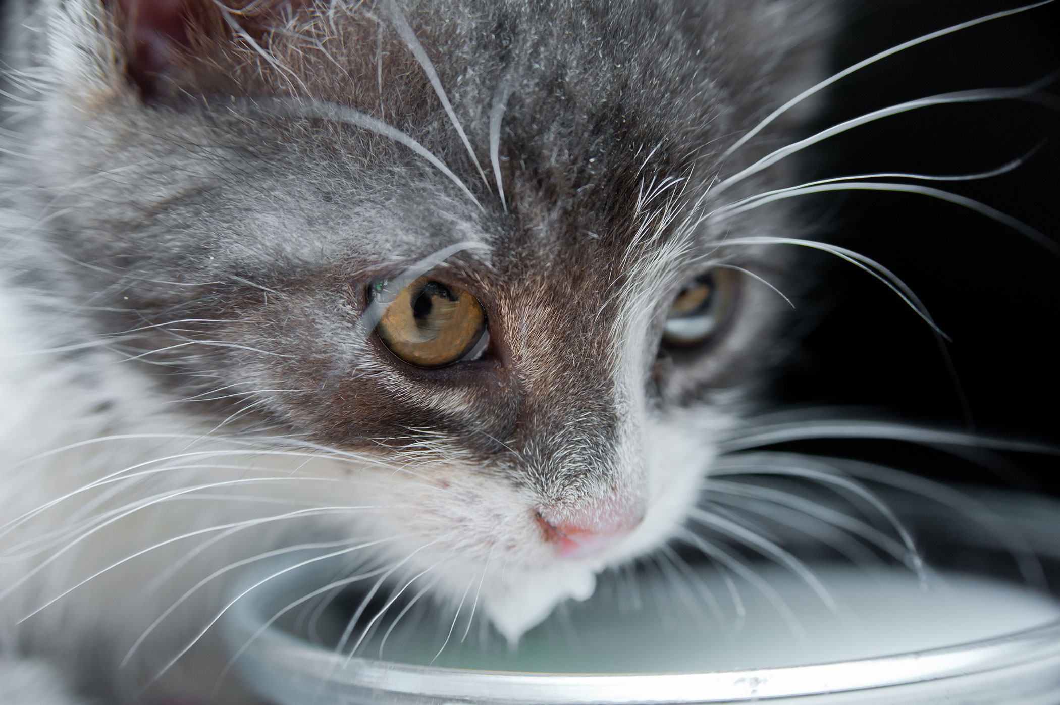 Bile Duct Cancer in Cats
