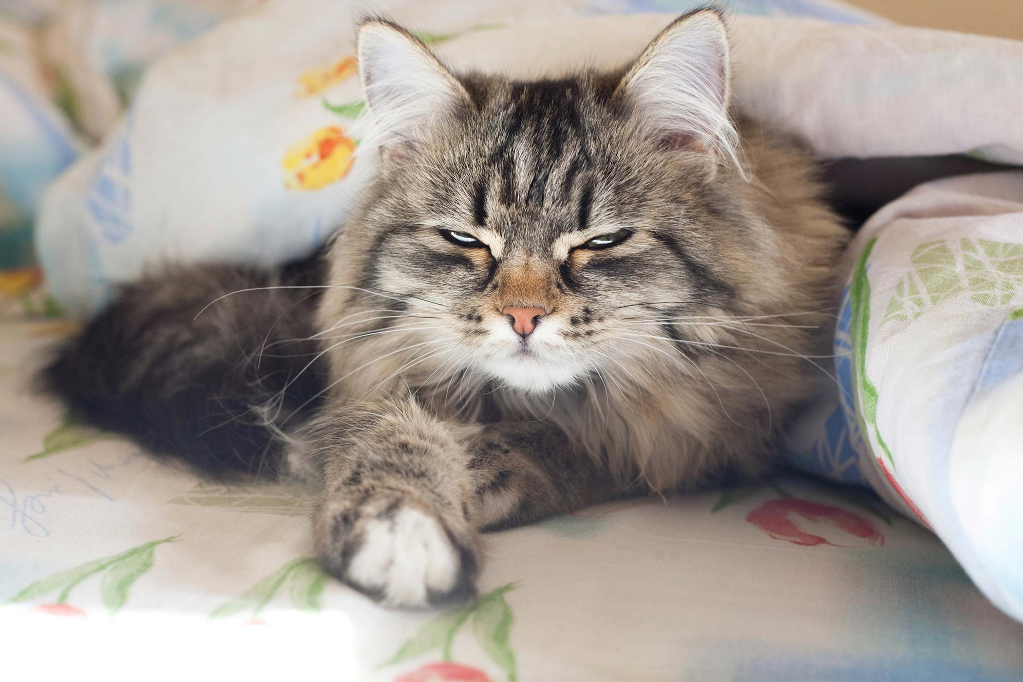 Bleeding Disorders in Cats