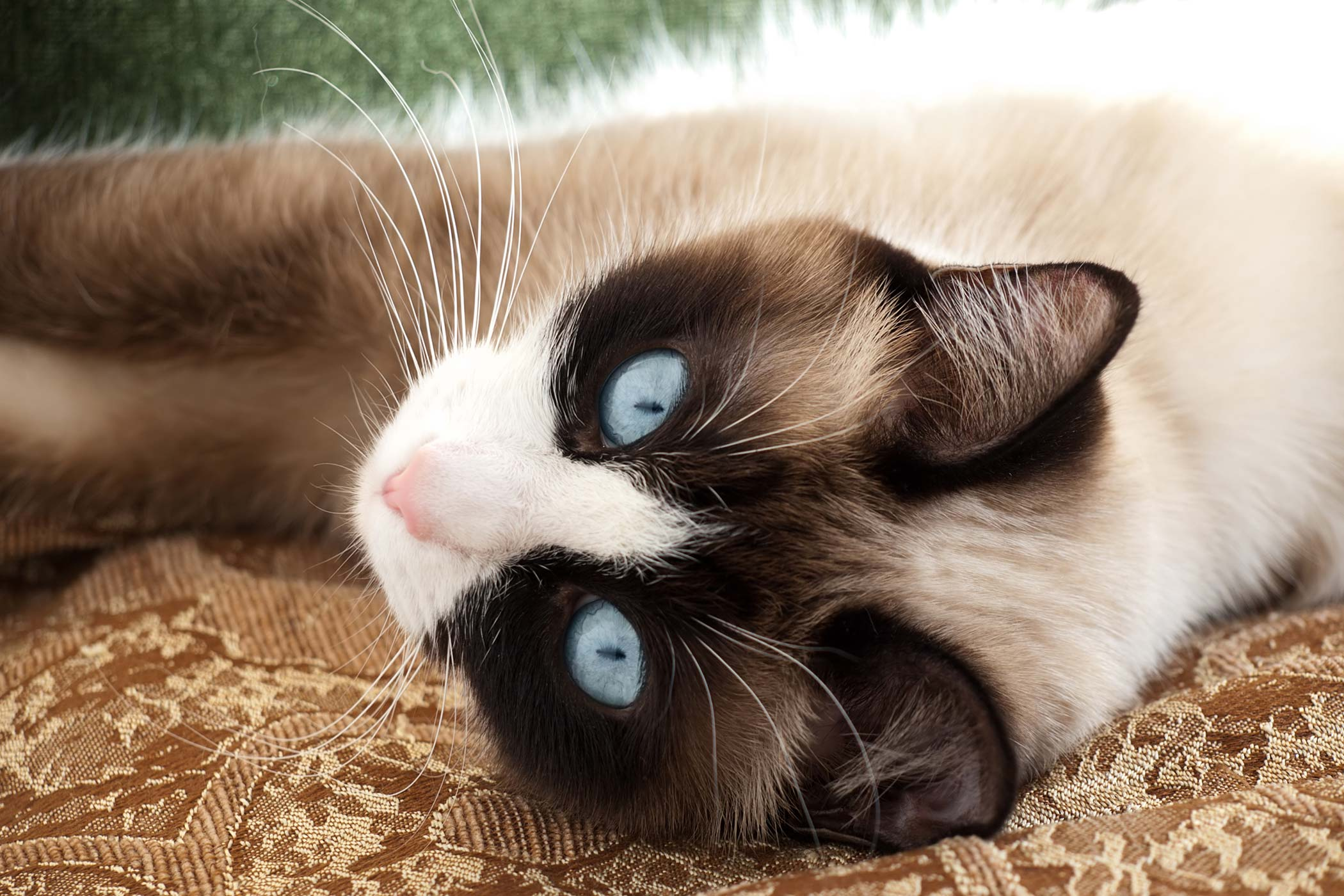 Cat ailments eyes