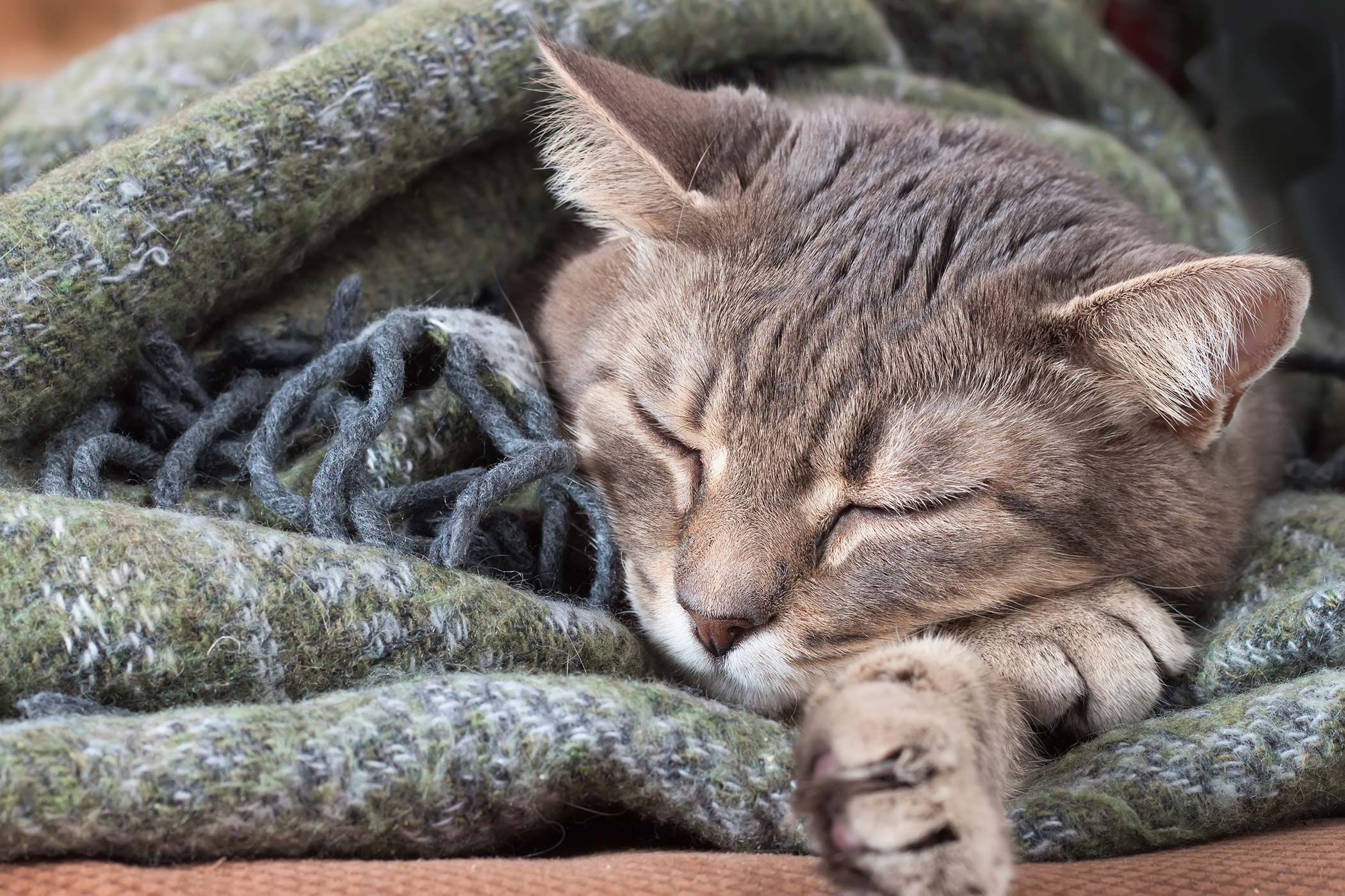 Blood Related Deficiencies in Cats