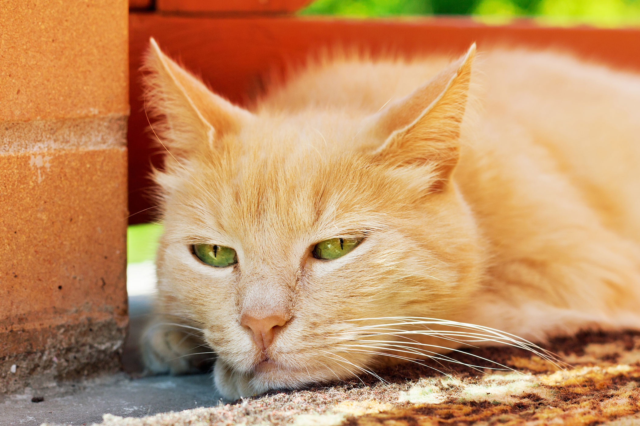 Blood Thickening in Cats