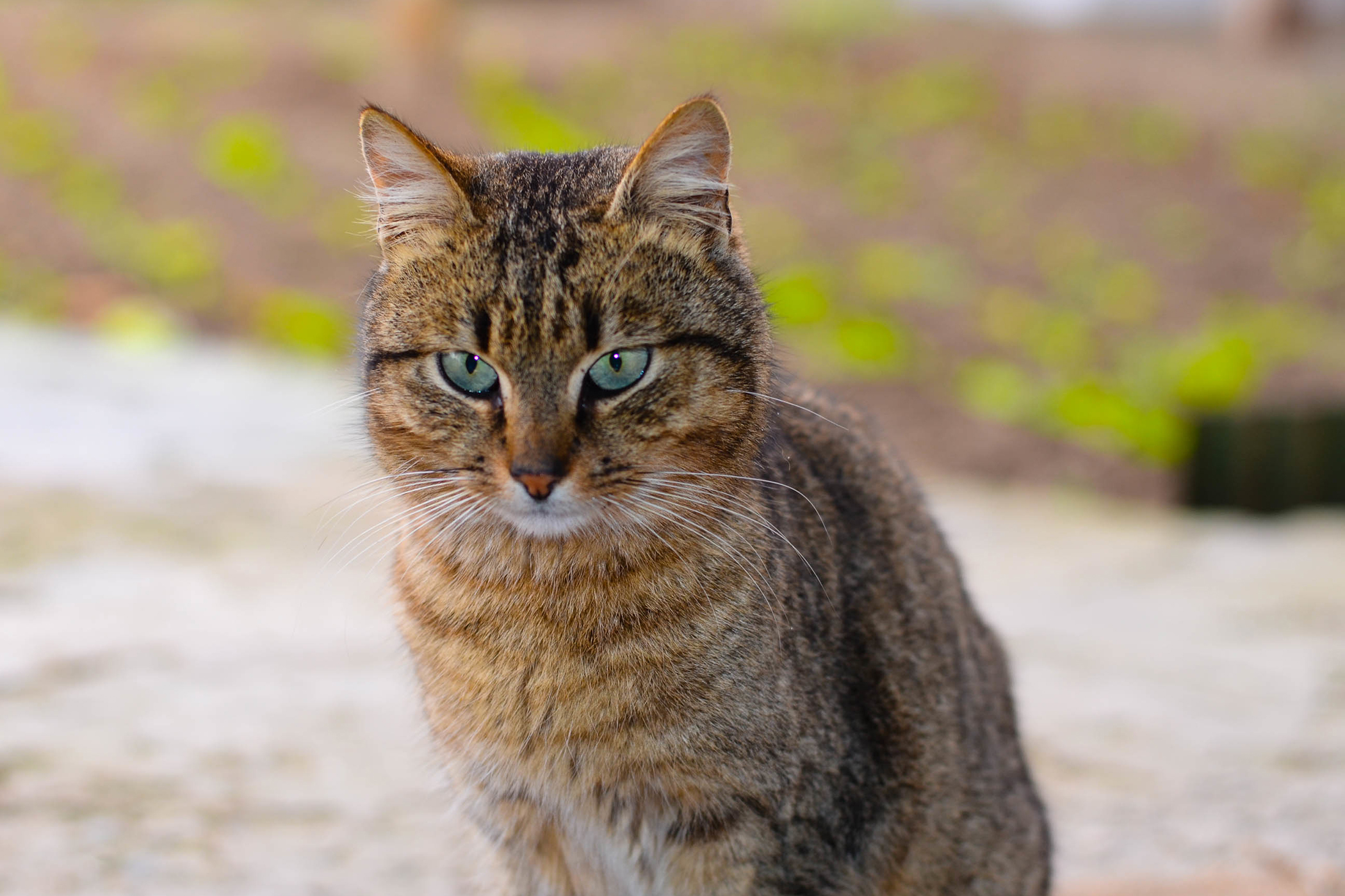 Blue Buffalo Allergy in Cats