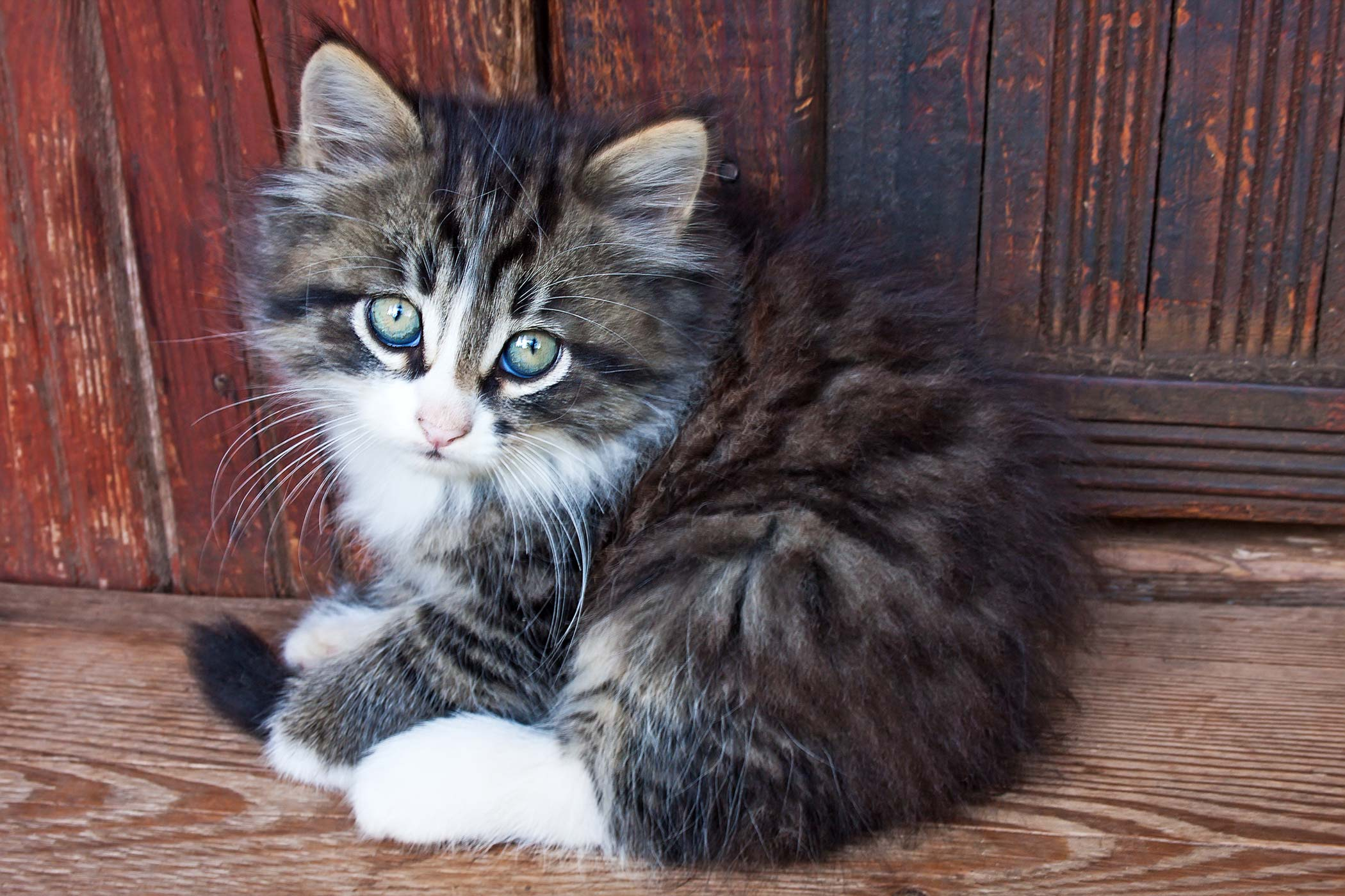 Blue Skin And Mucous Membranes in Cats