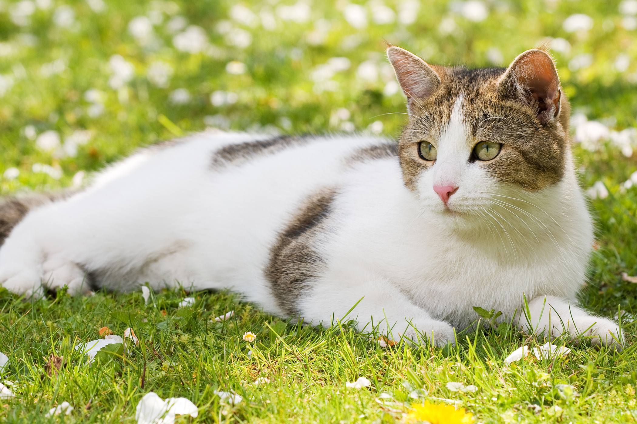 Blue Wilderness Allergy in Cats