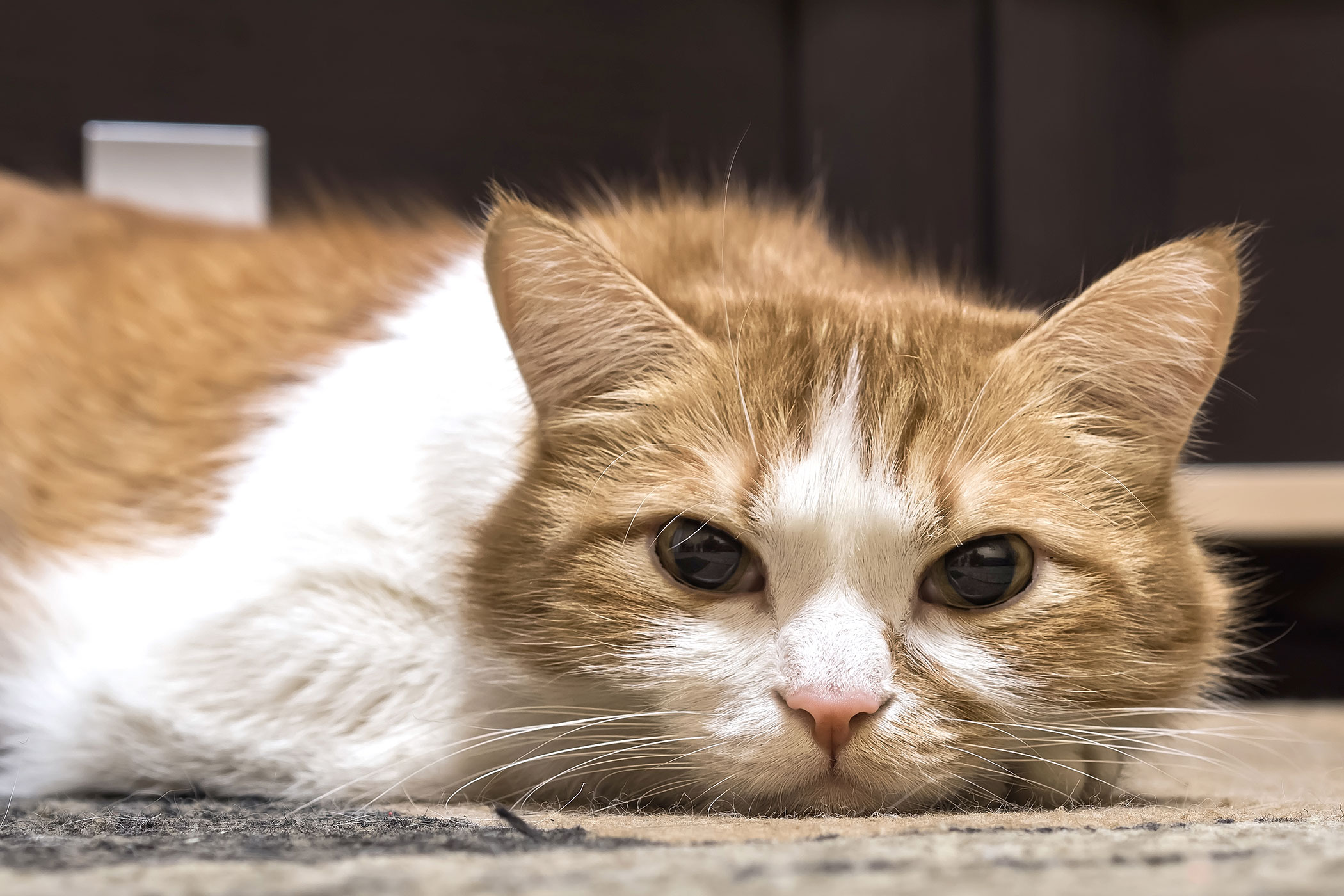Bone Overgrowth in Cats