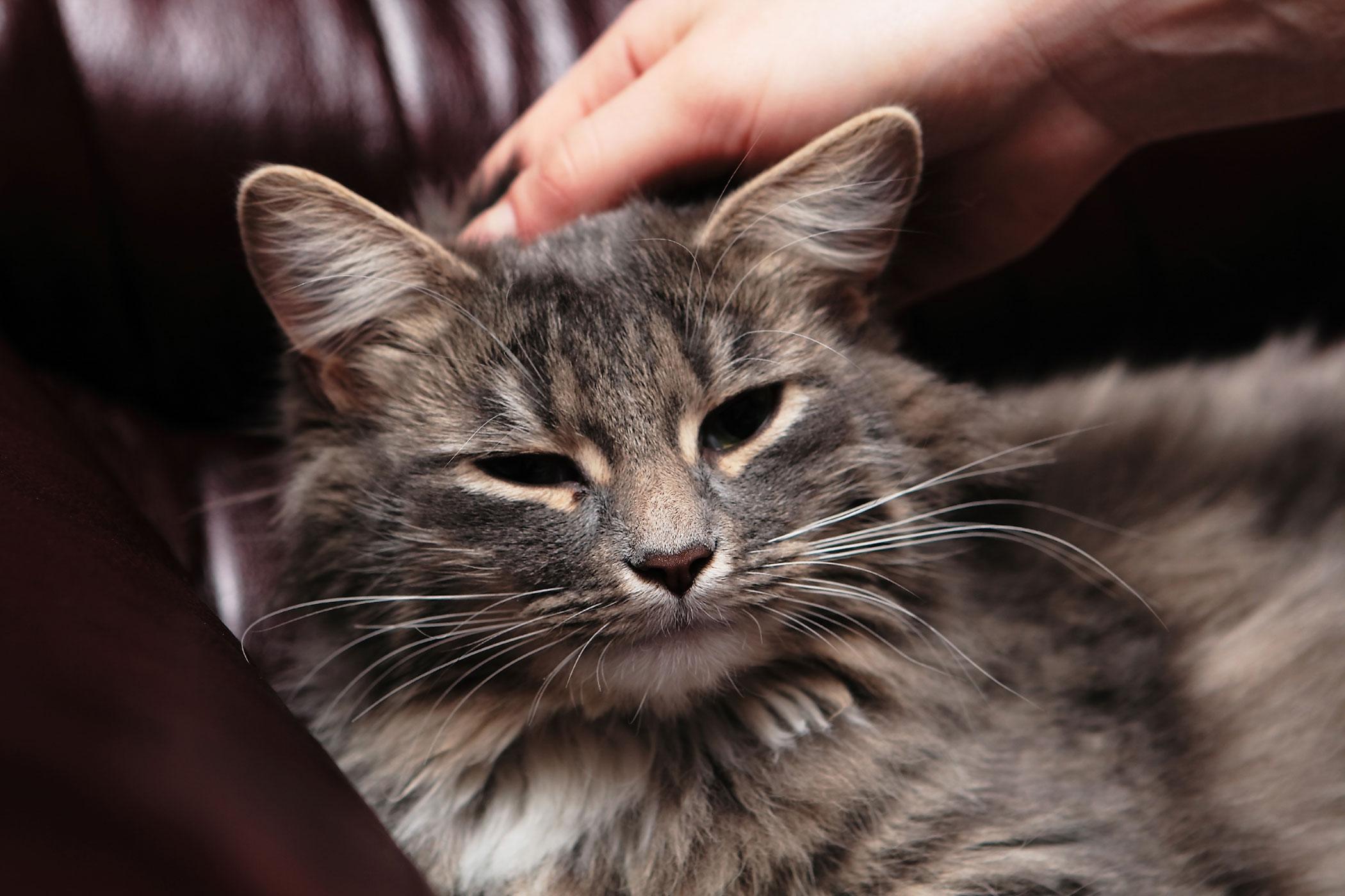 Botulism in Cats