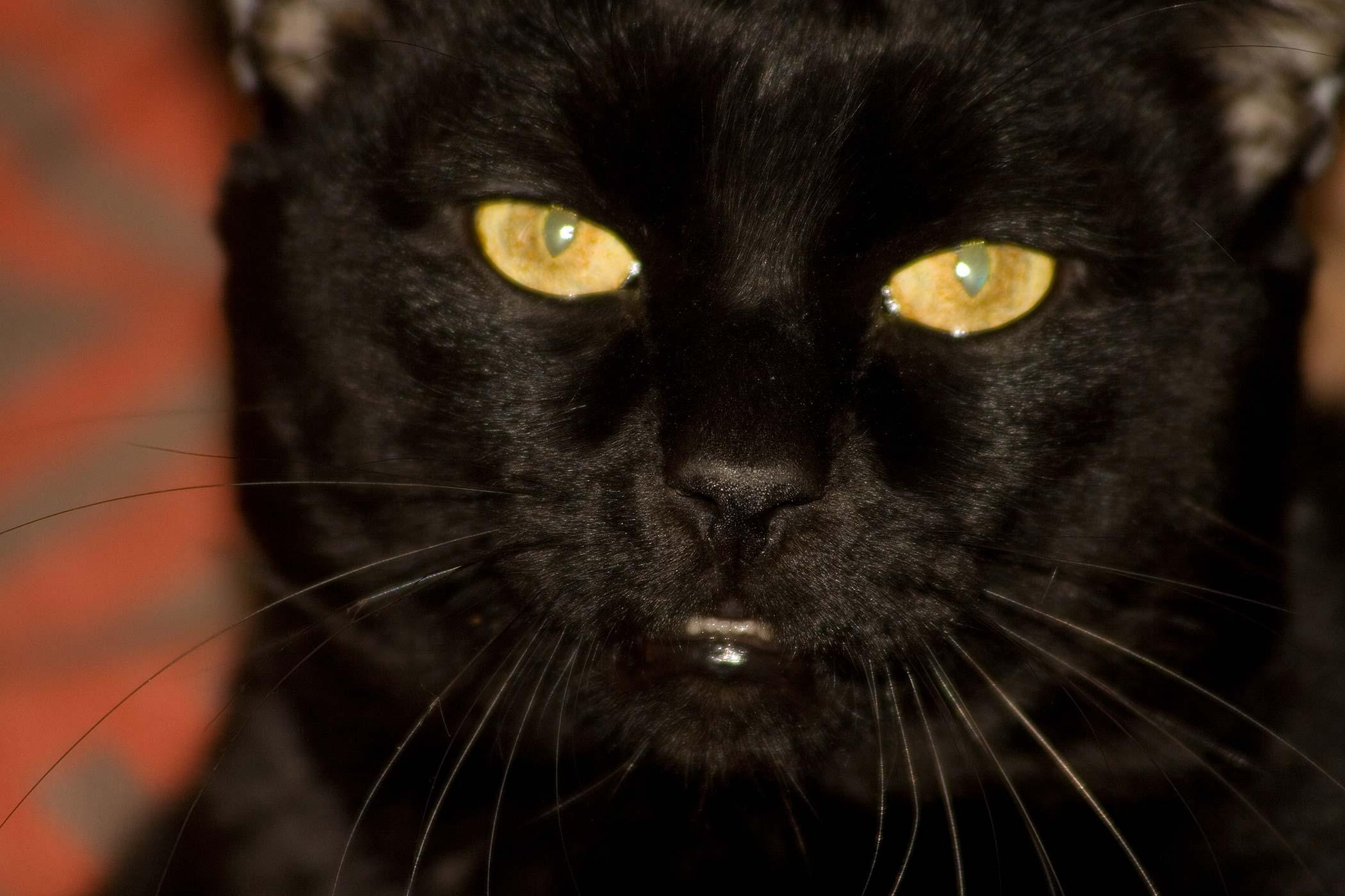 Brain Parasites in Cats