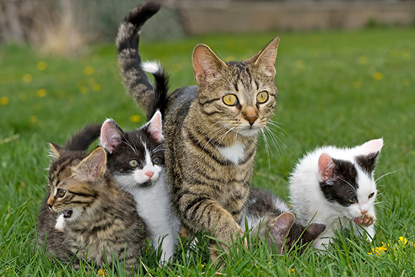 Breeding Timing in Cats