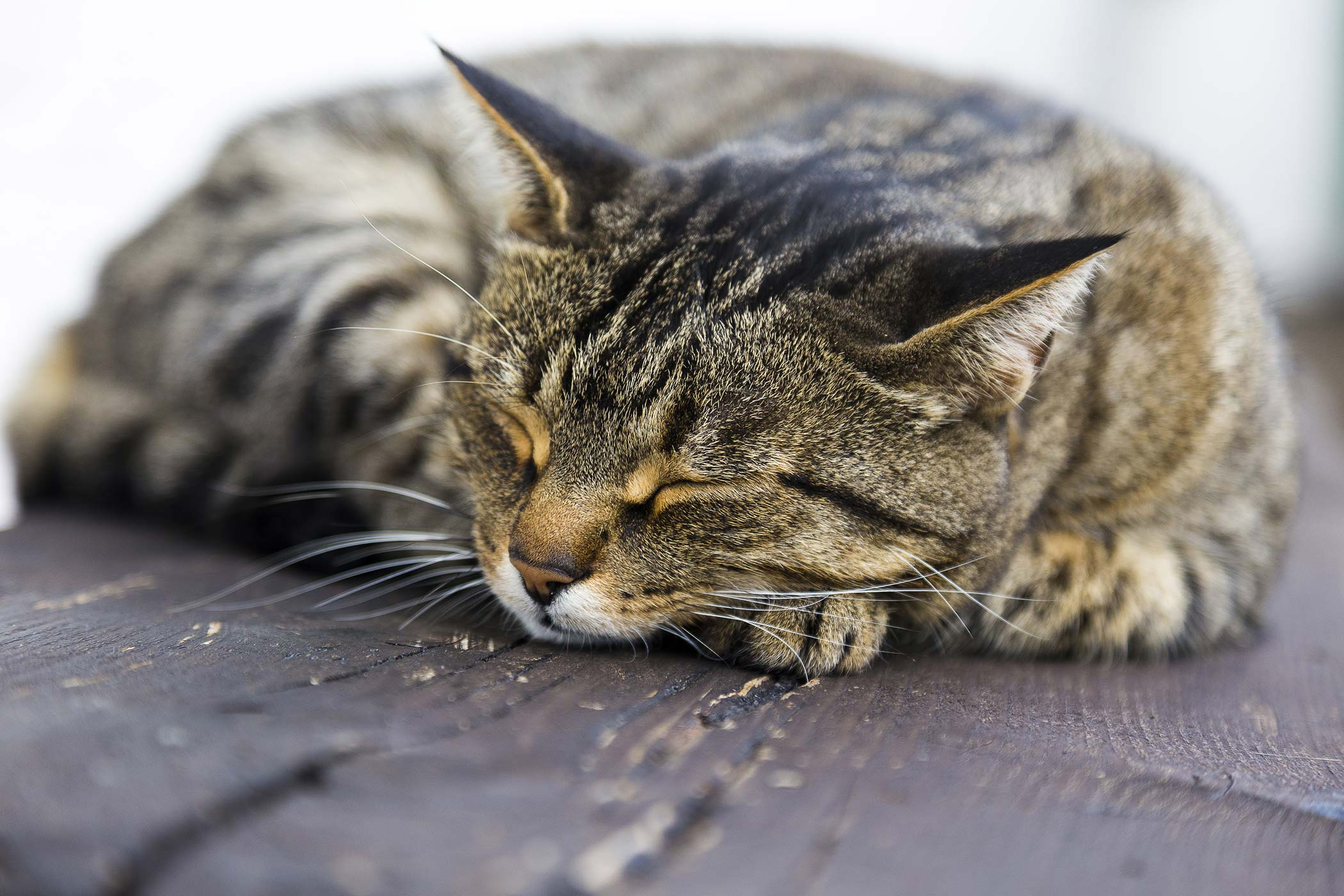 Calcium Deposits in the Urinary Tract in Cats