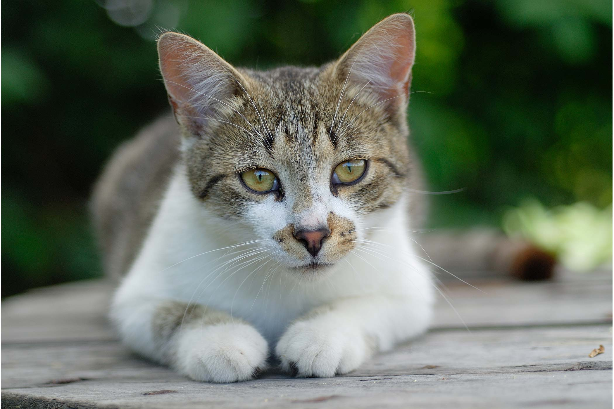 Cancer of the Uterus in Cats