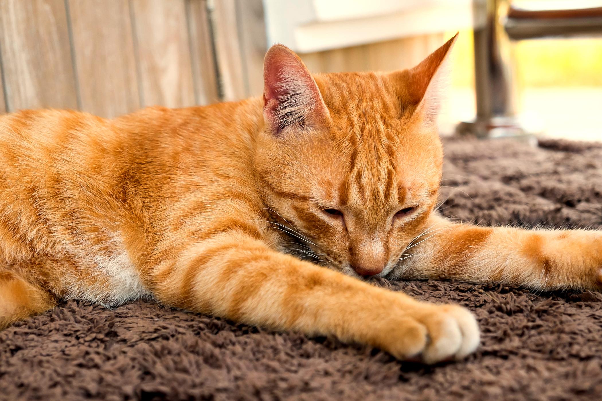 new carpet allergy symptoms – Meze Blog