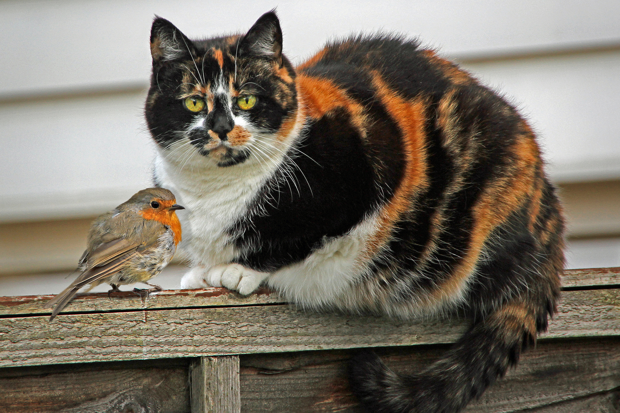 Chagas Disease in Cats