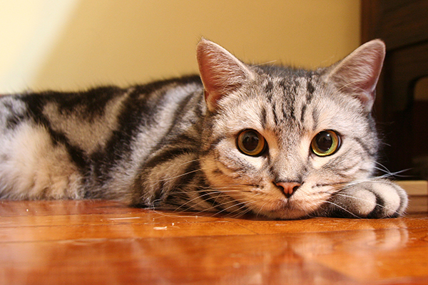 Chemical Imbalance of Urine in Cats