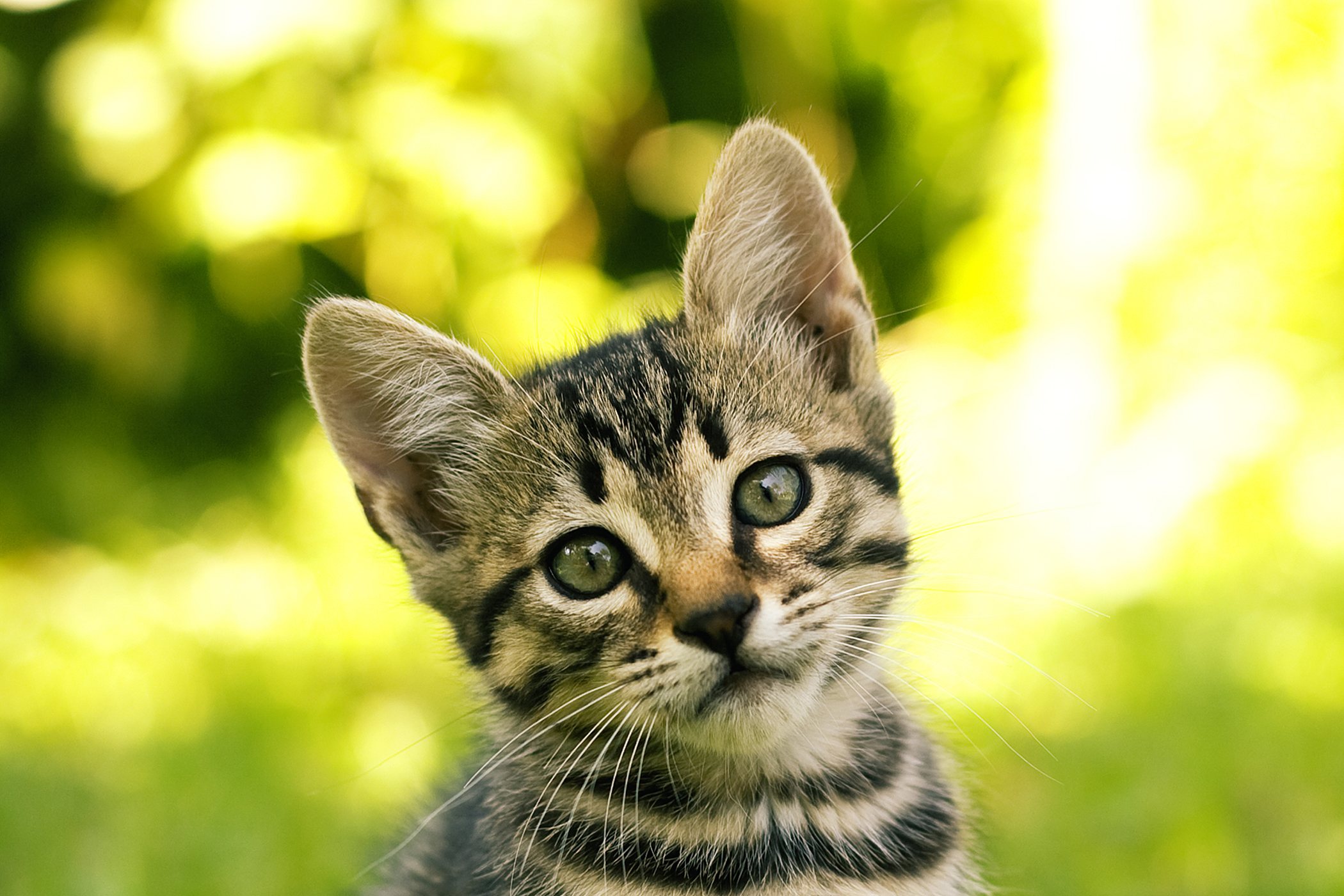 Cost Of Chlorambucil For Cats