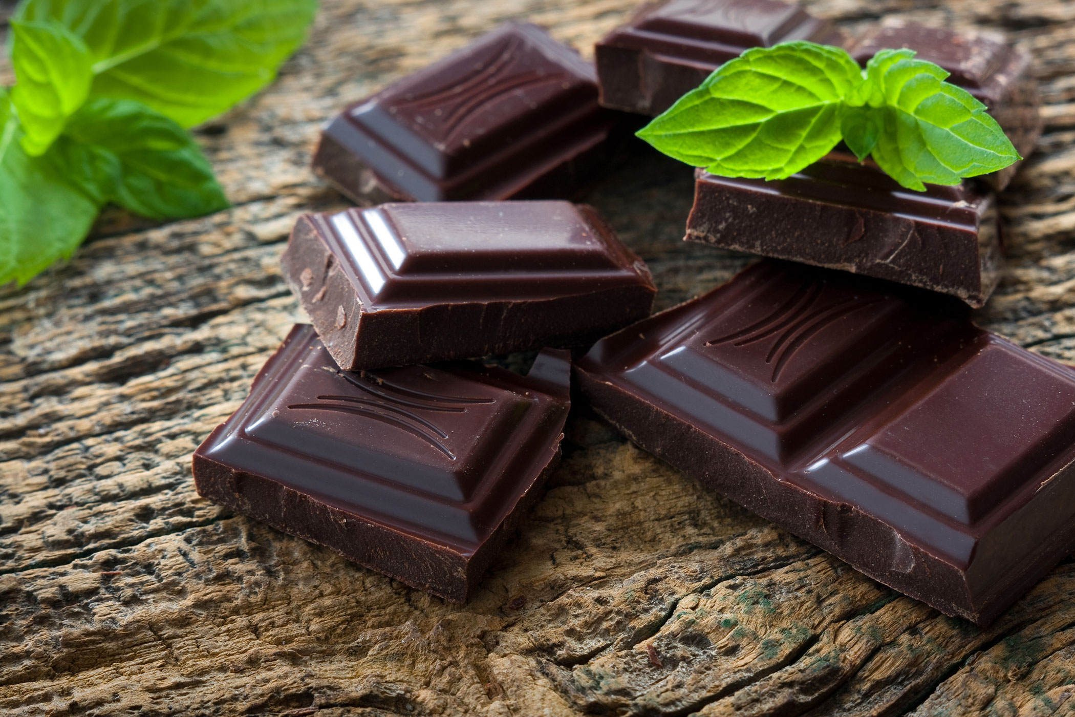 Chocolate Poisoning in Cats