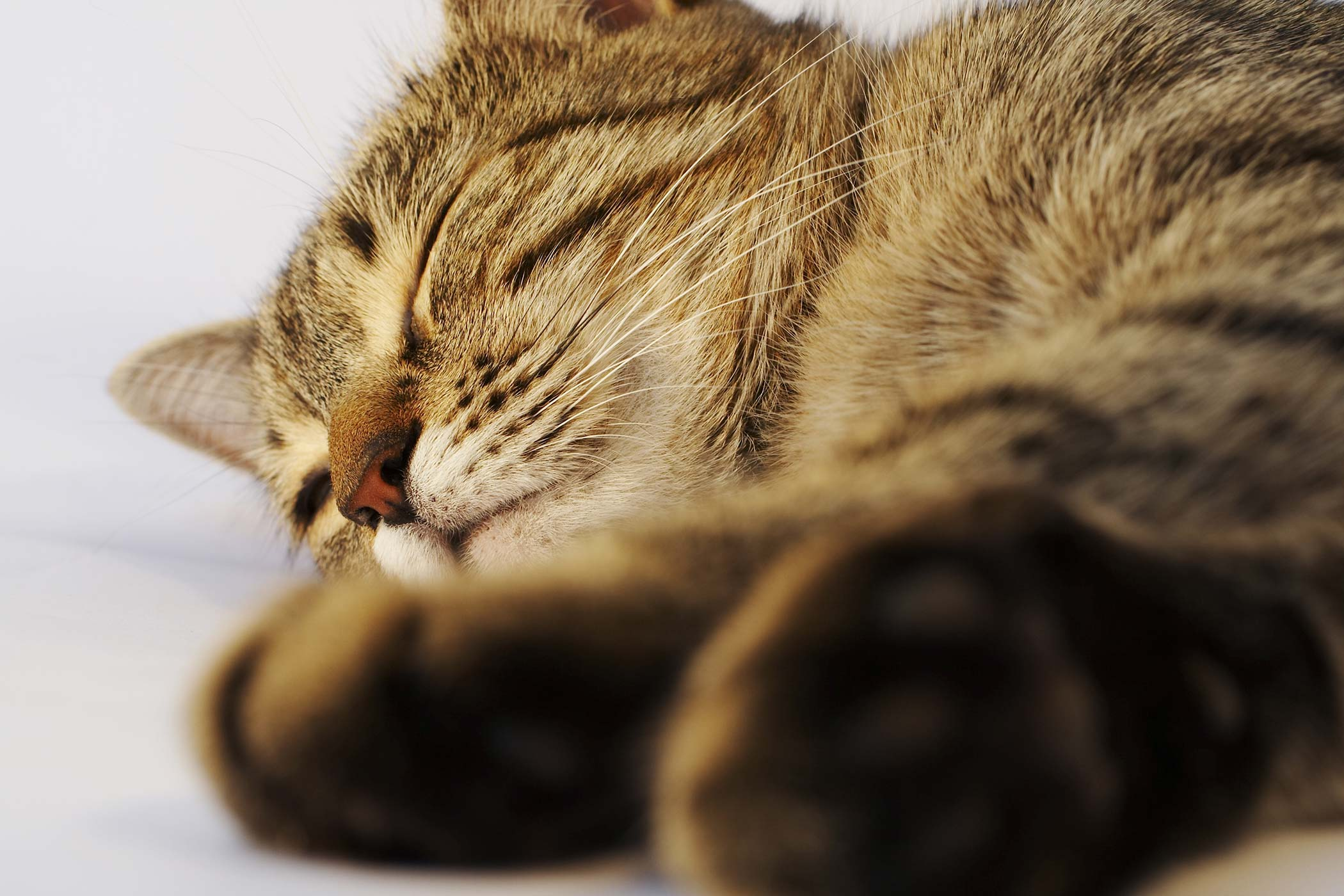 Claw and Nail Disorders in Cats