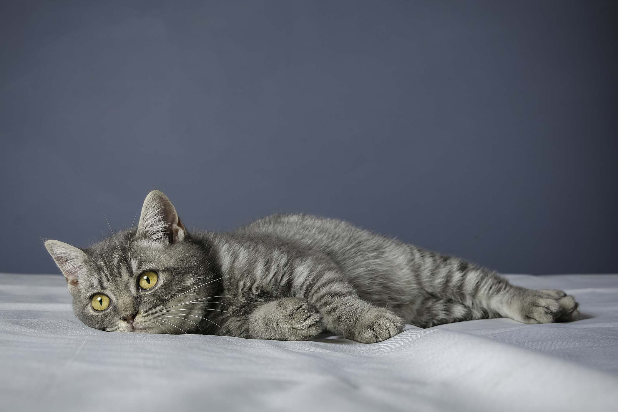 Clotting Deficiency in Cats