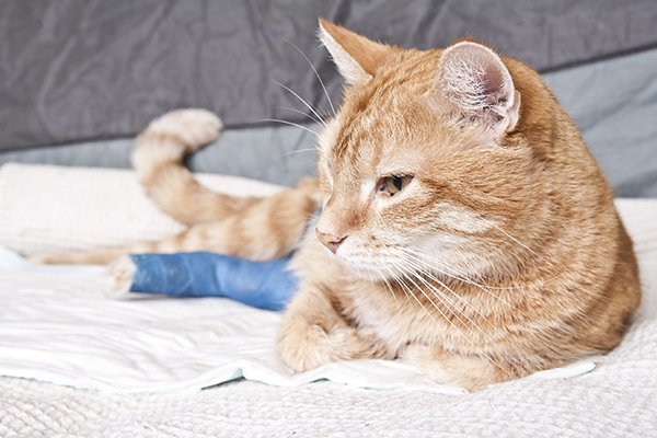 Comminuted Fractures in Cats
