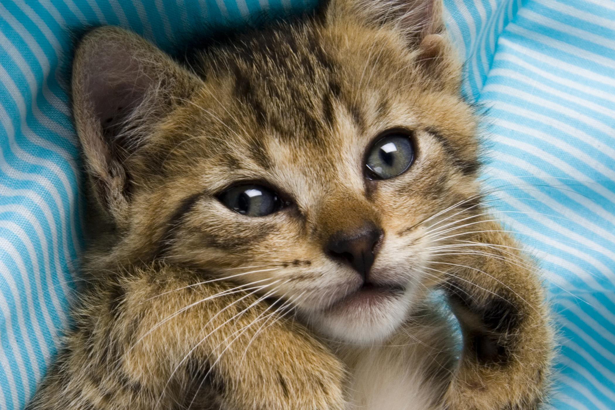 Cryptosporidiosis in Cats