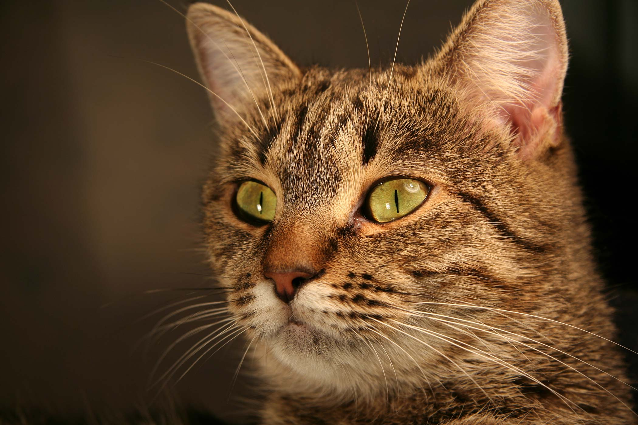 Crystals in the Urine in Cats