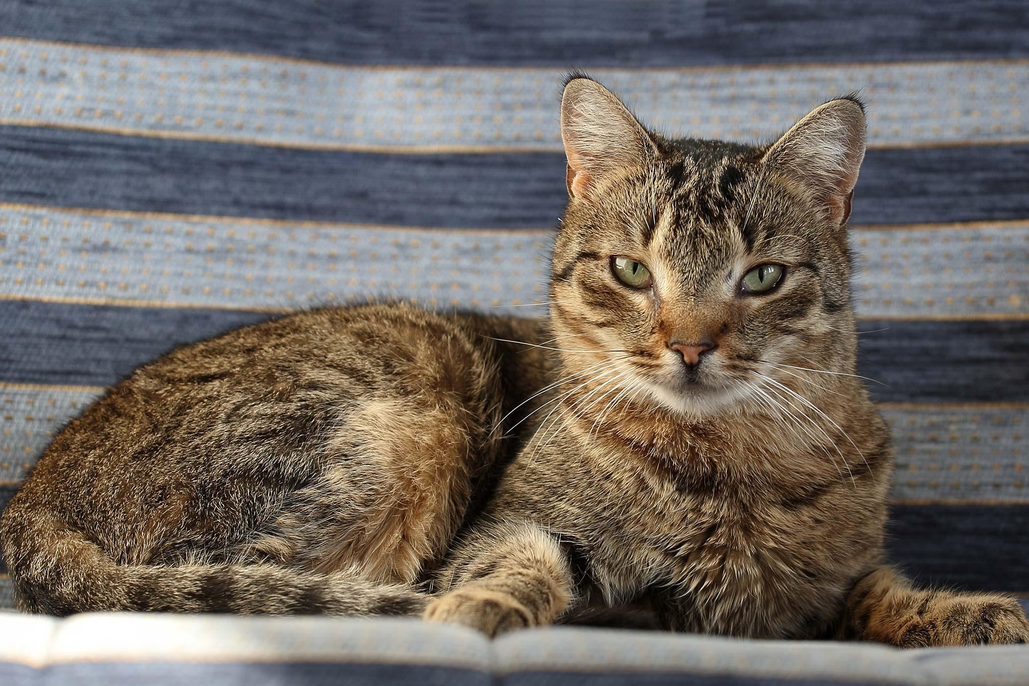 Degeneration of the Cerebellum in Cats