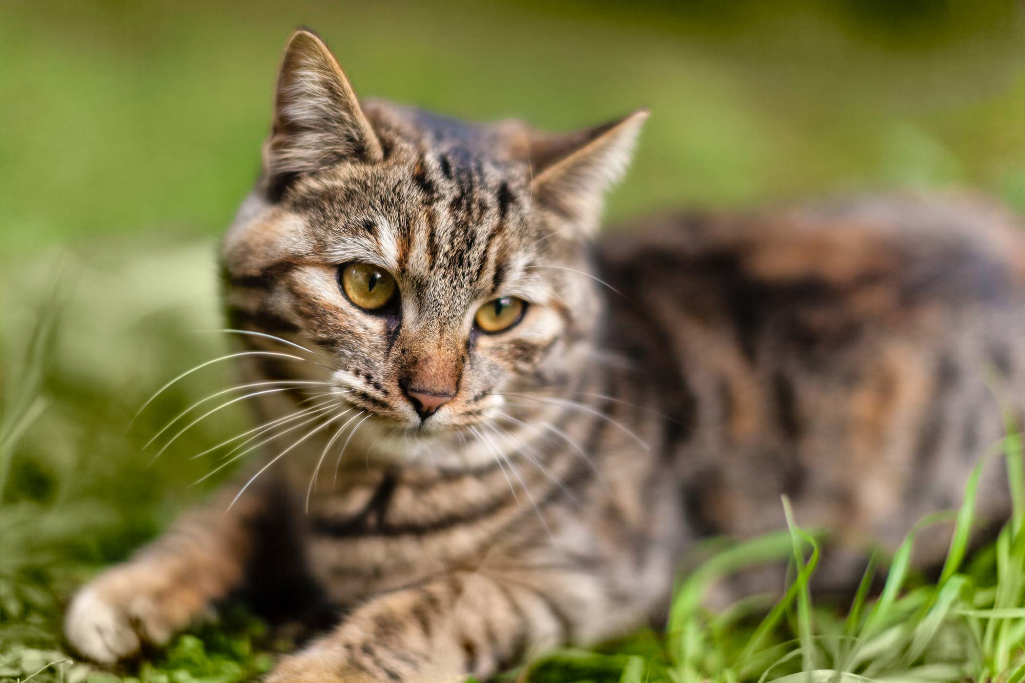Degeneration of the Iris in the Eye in Cats