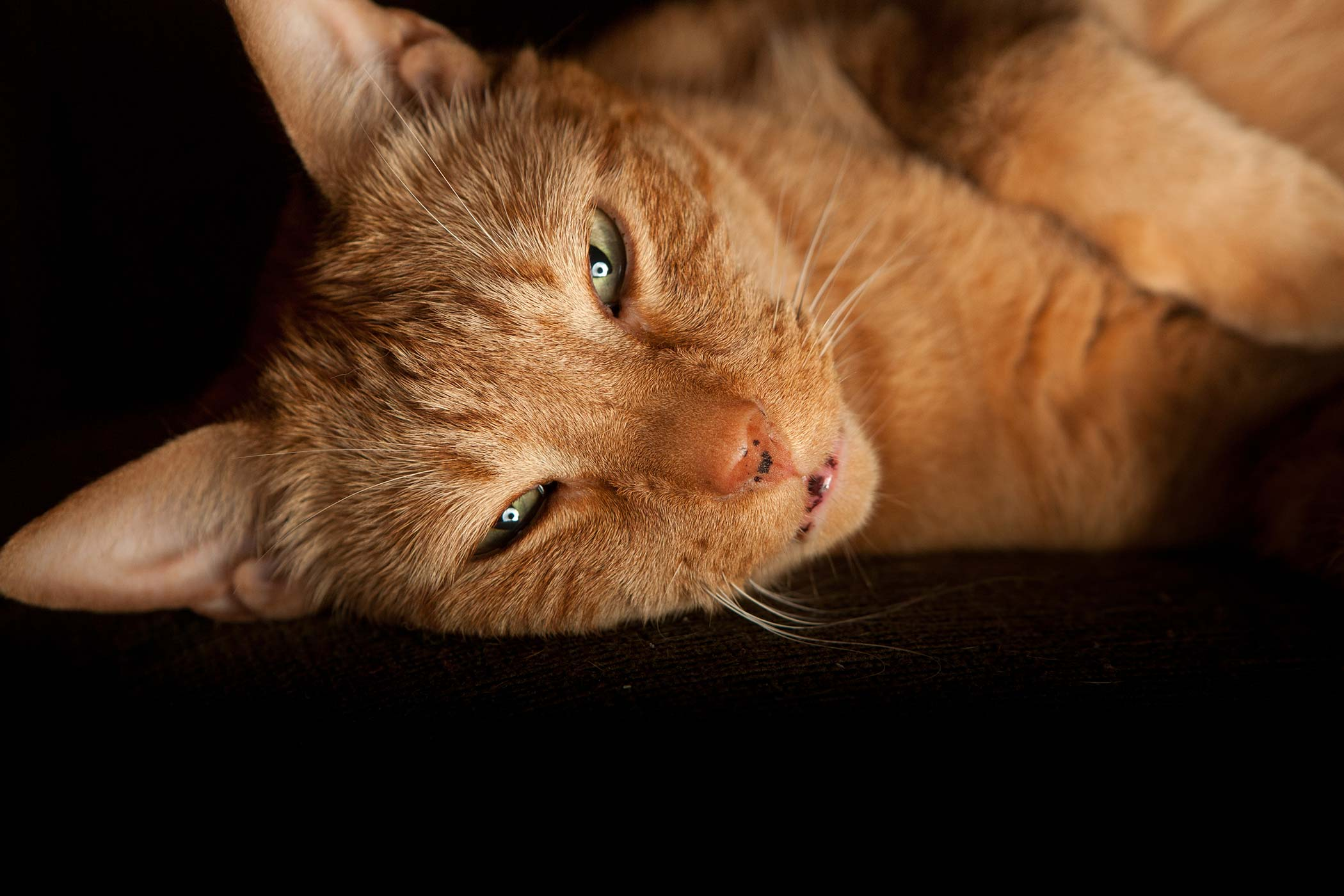 E. Coli Infection in Cats