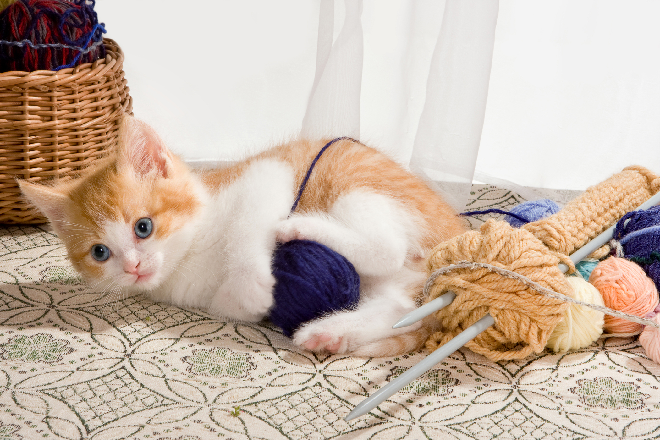 Electrical Injuries in Cats