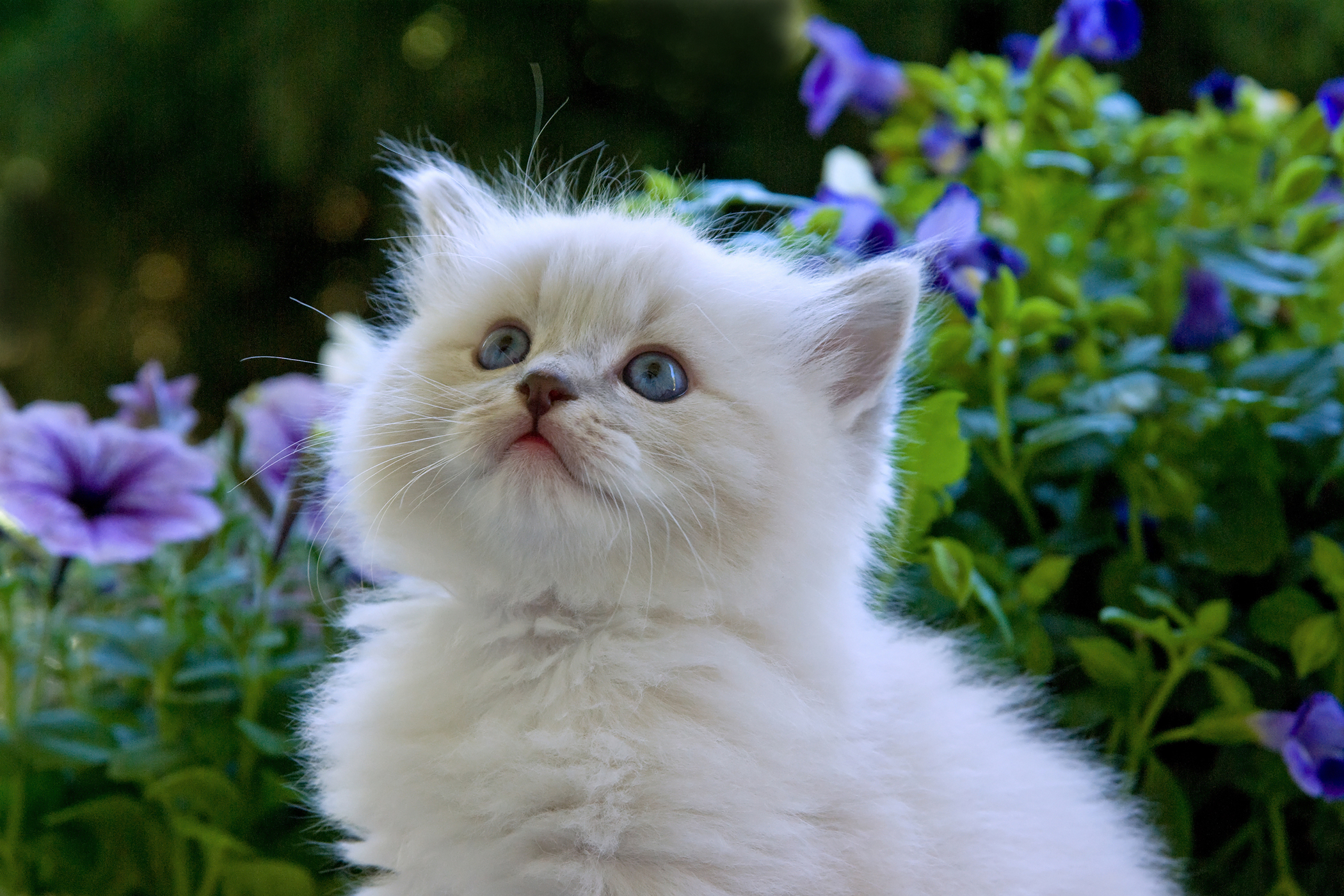 Emphysema in Cats
