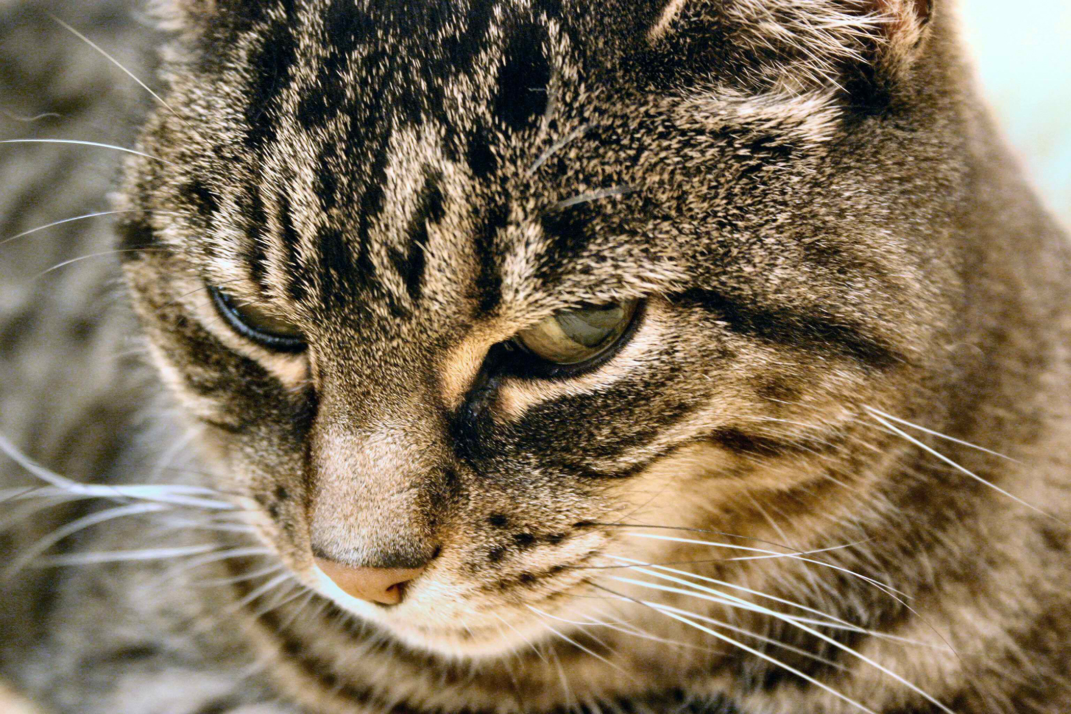 Eosinophilic Gastroenteritis in Cats