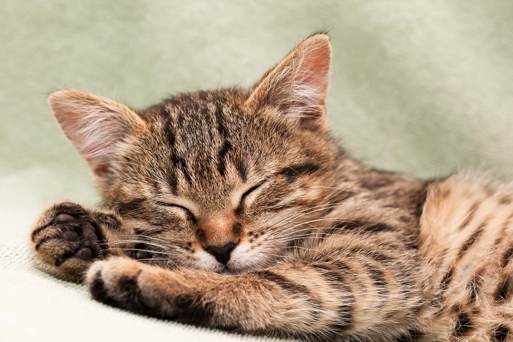 Excess Chloride in the Blood in Cats