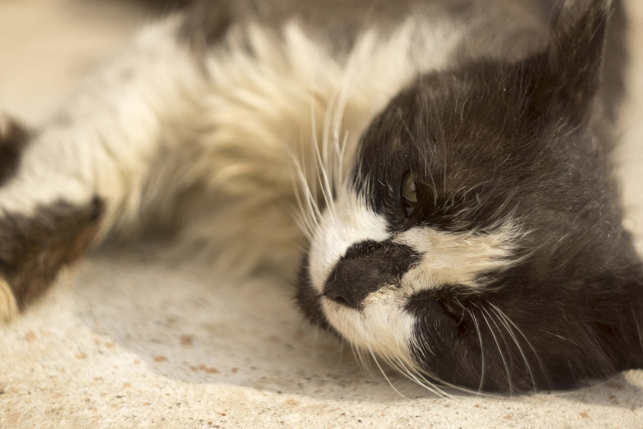 Excessive Potassium in the Blood in Cats