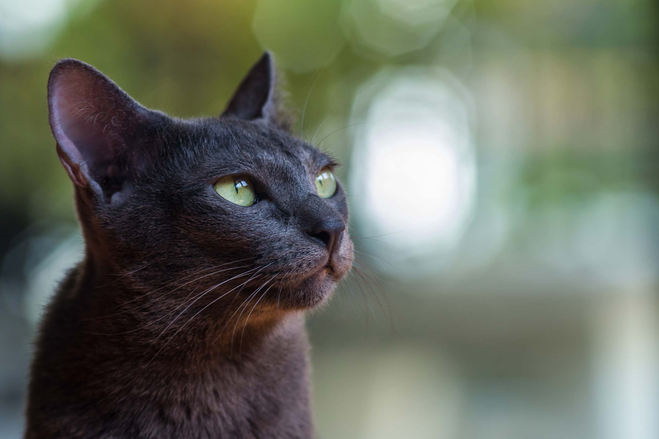 Excessive Vocalization in Cats