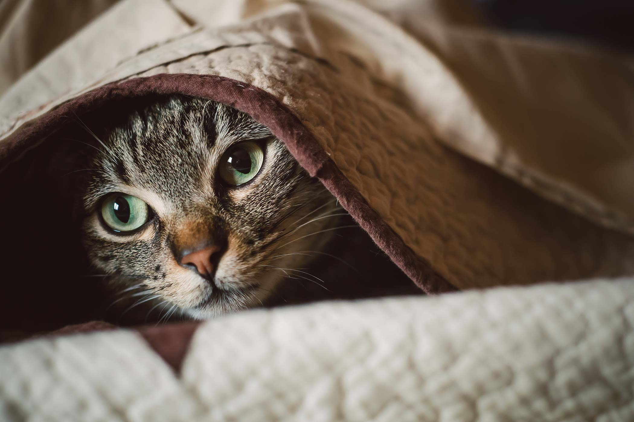 Extreme Fear and Anxiety in Cats