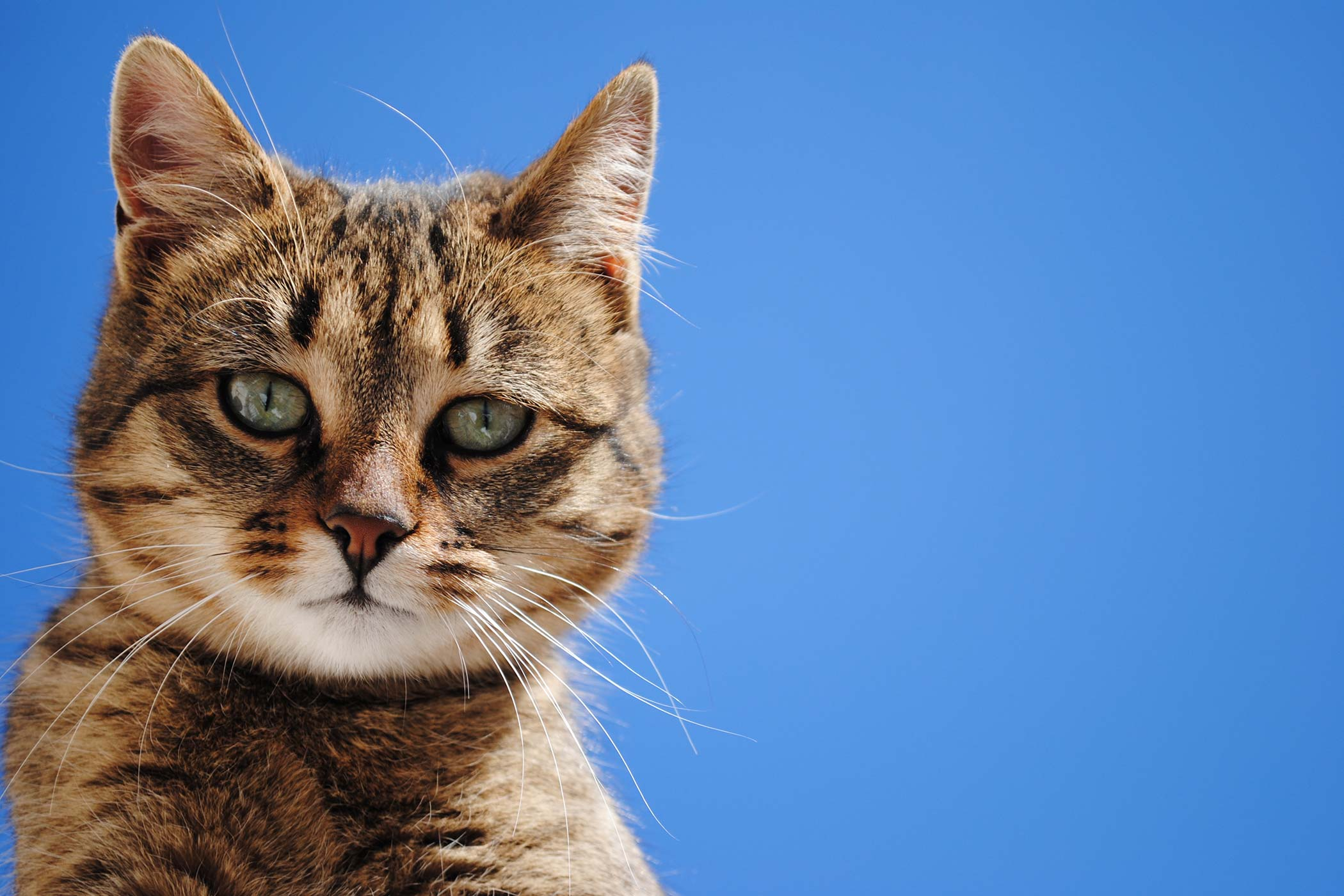 Eyelash Disorders in Cats - Symptoms, Causes, Diagnosis, Treatment, Recovery, Management, Cost