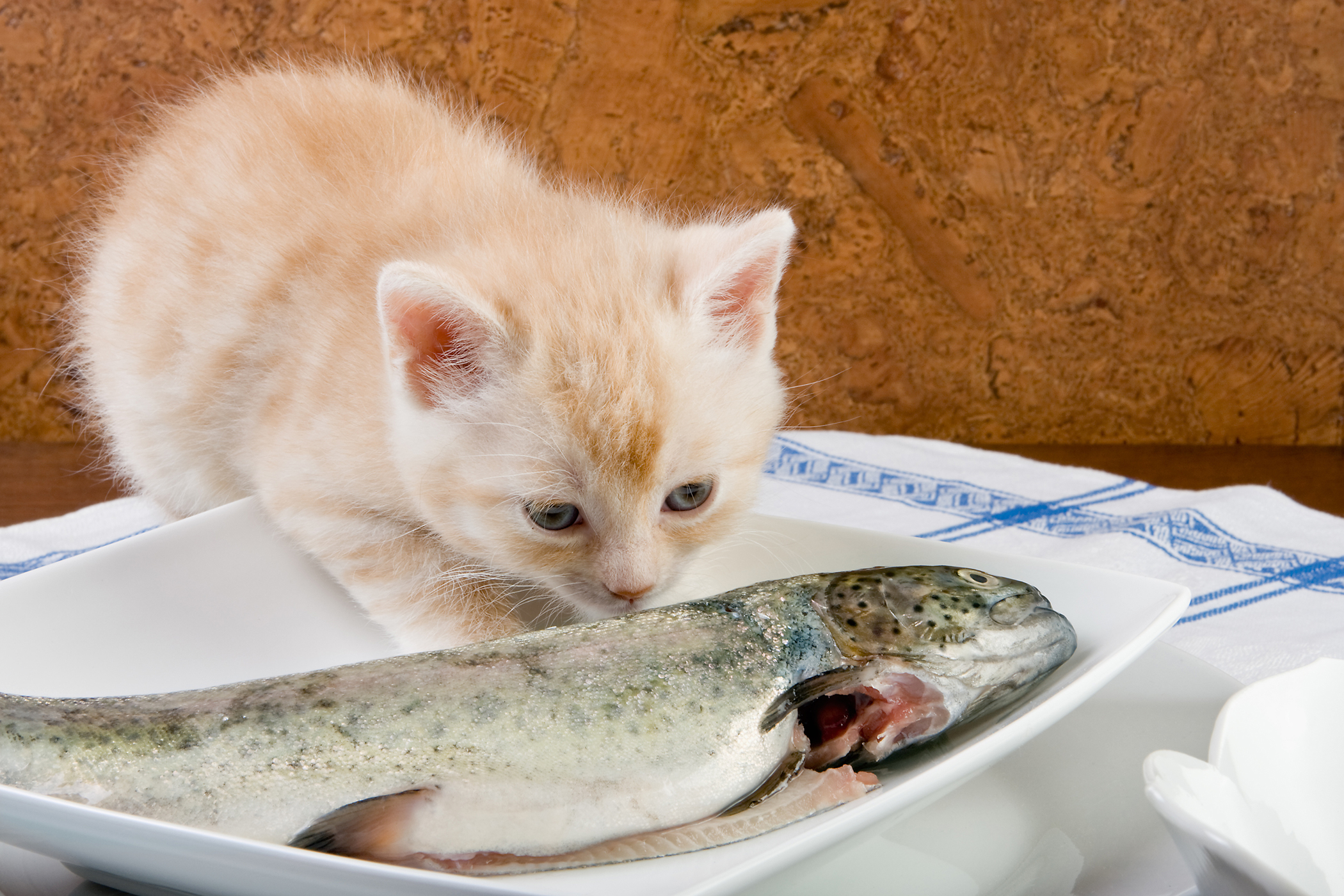 Fish Allergy in Cats