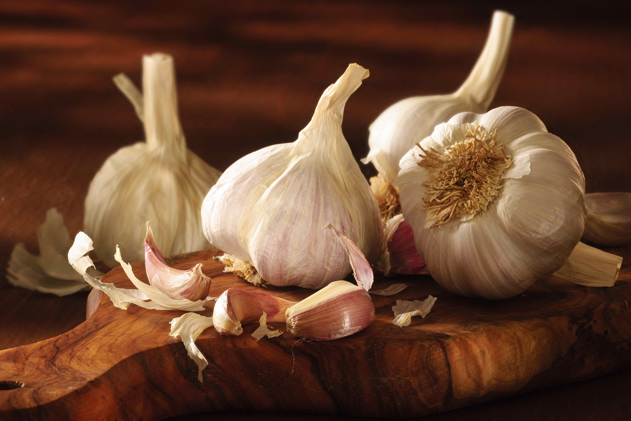 Garlic Poisoning in Cats